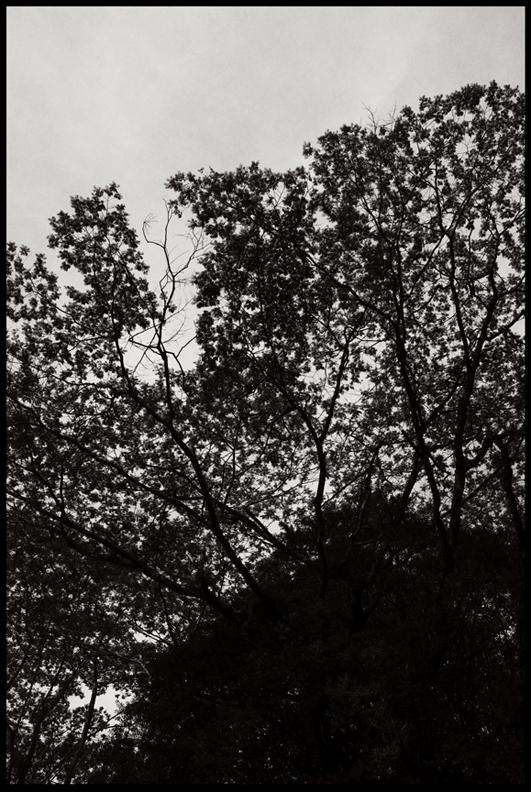 8.Tree.jpg