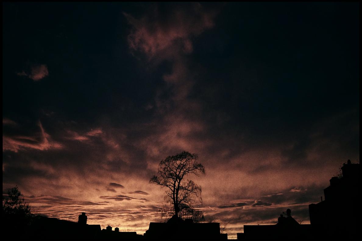 9.Tree.jpg