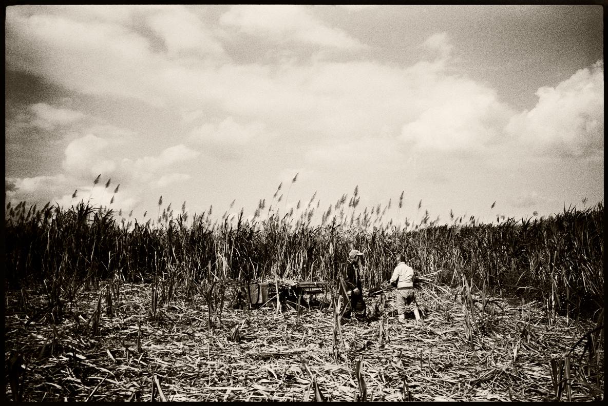 Sugar plantation workers. Ada, Okinawa