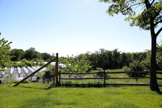 Stone Barns Greenhouse - Hill Reeves; photo by Alexis Buatti Ramos