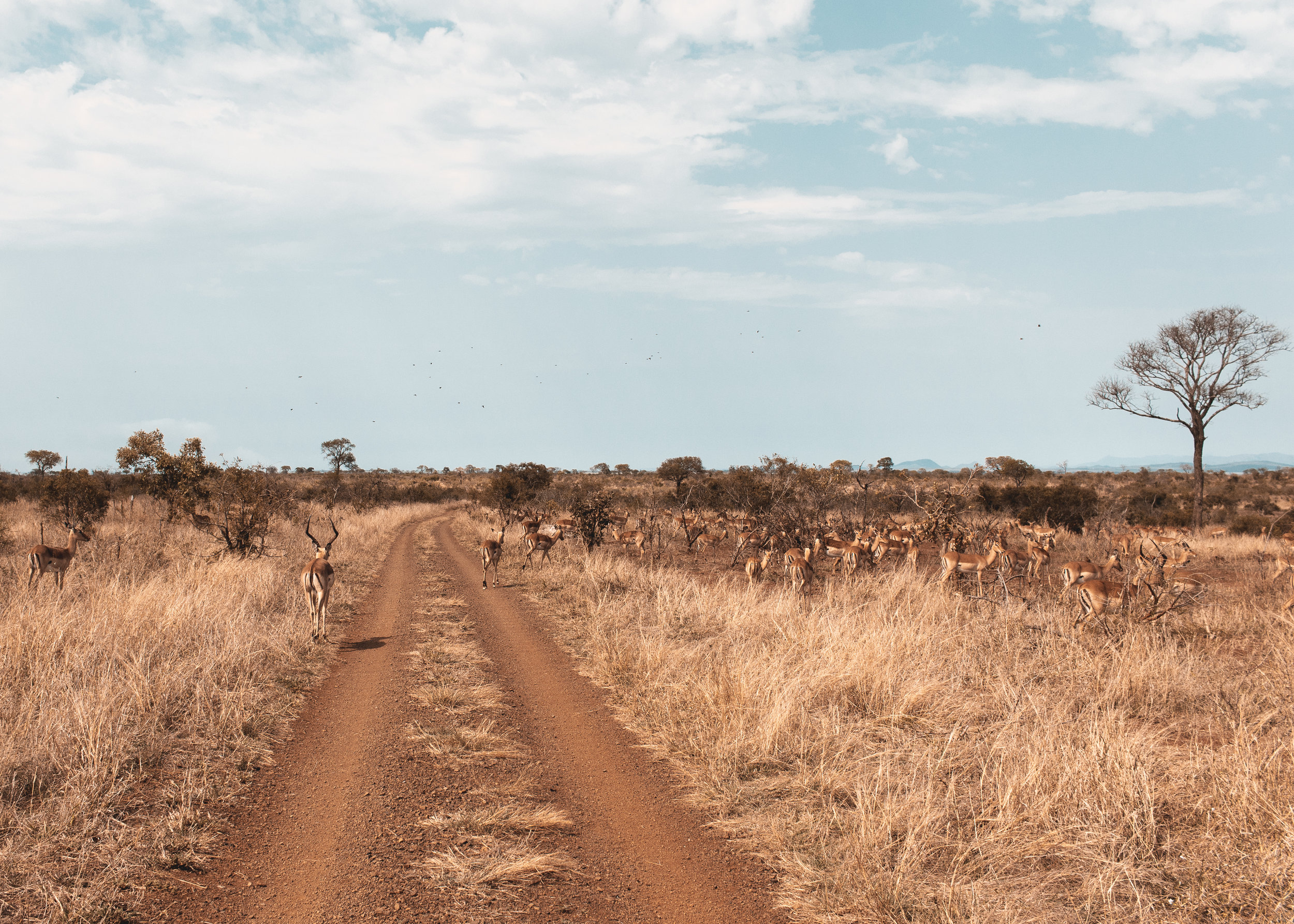 SOUTH AFRICA-10.jpg