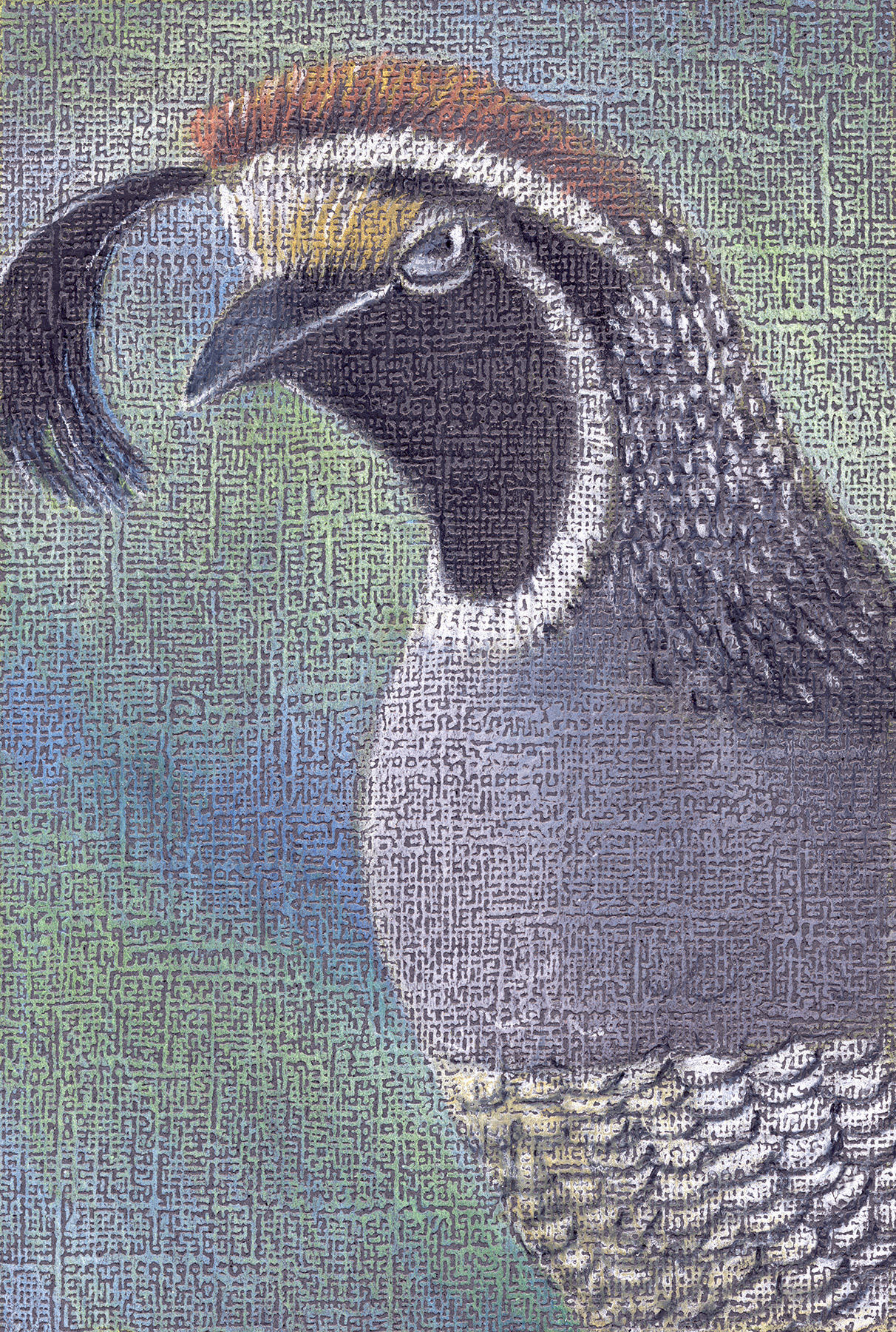 quail scan 4x6+.jpg