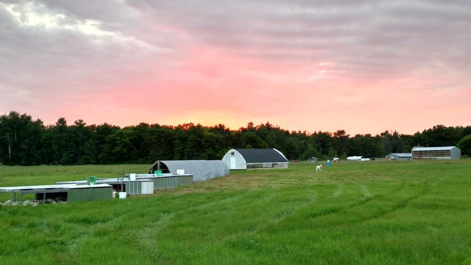 Nelson Grass Farm