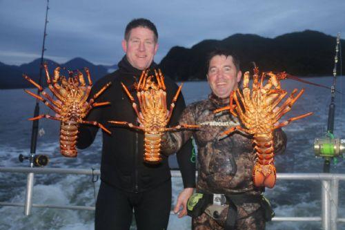 crayfish_fiordland_carl_steve.jpg