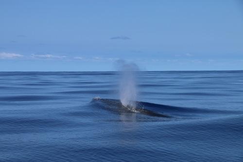 whale_coromandel.jpg