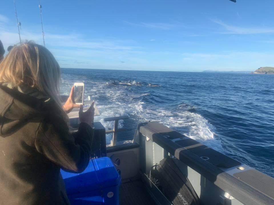 dolphinsrach.jpg
