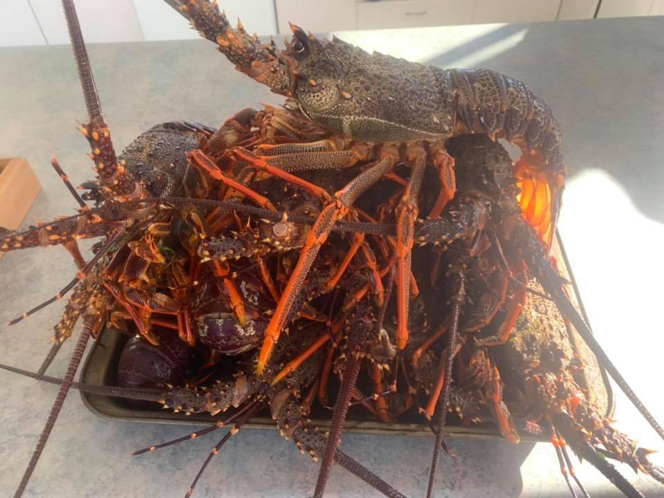 crayfish_june.jpg