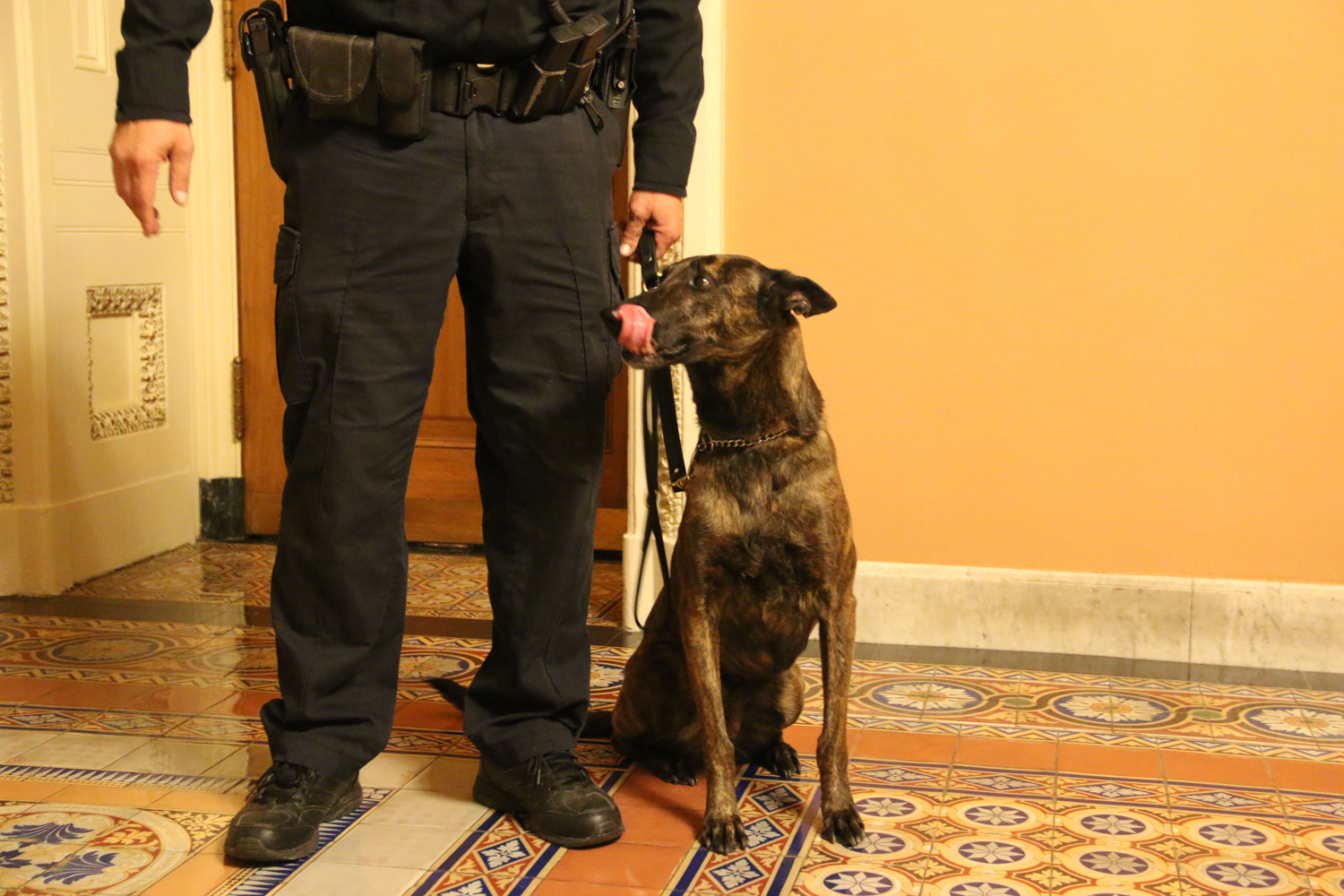 Bomb-sniffing dogs patrol the building as Capitol police conduct security sweeps before the State of the Union address.