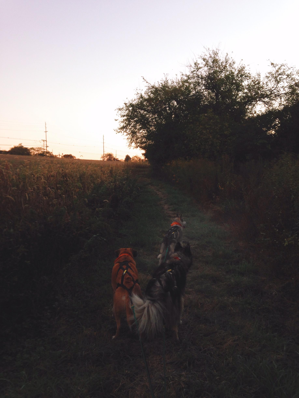 Dawn at Six Mile Run