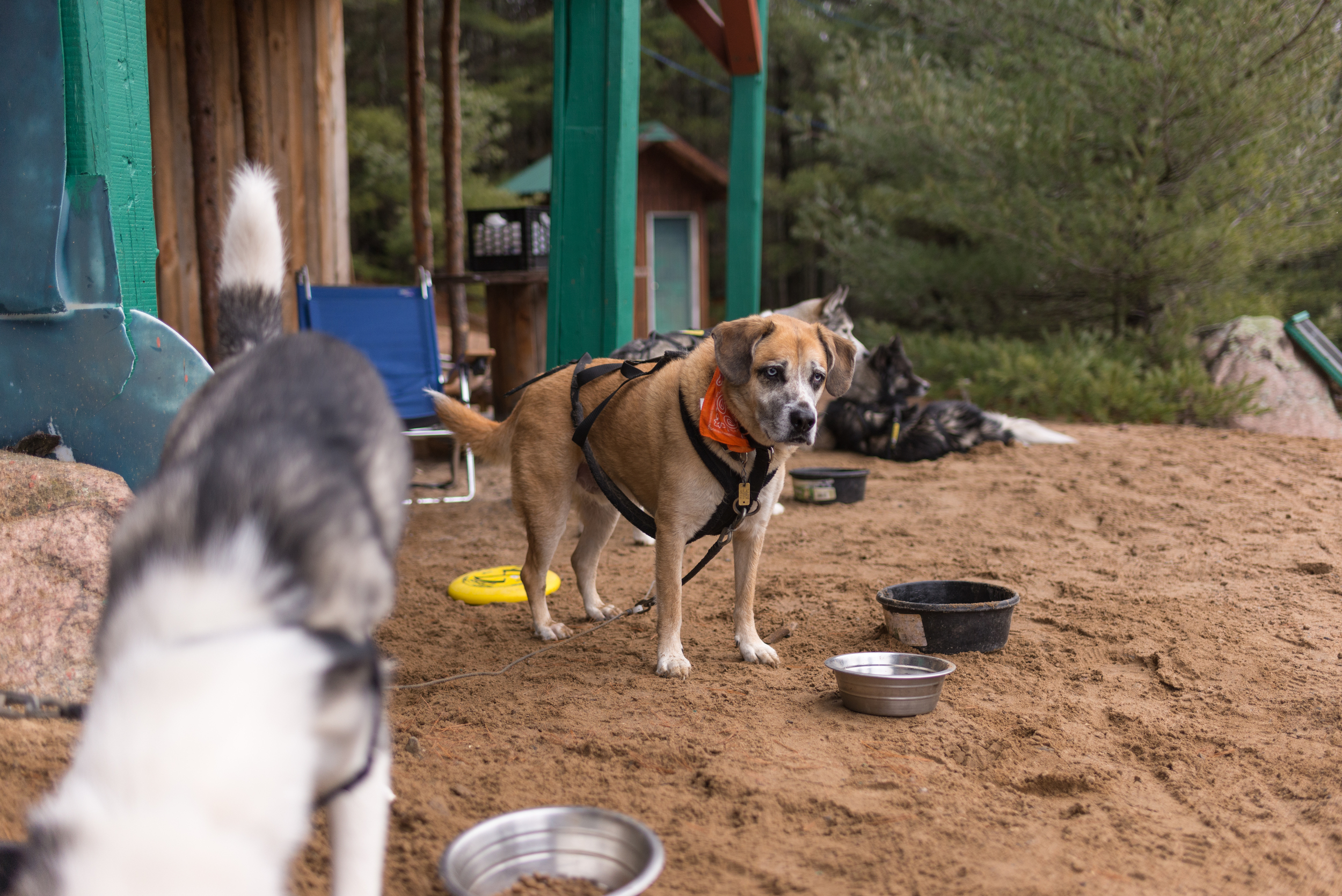 mushing-trip-dslr-4202.jpg