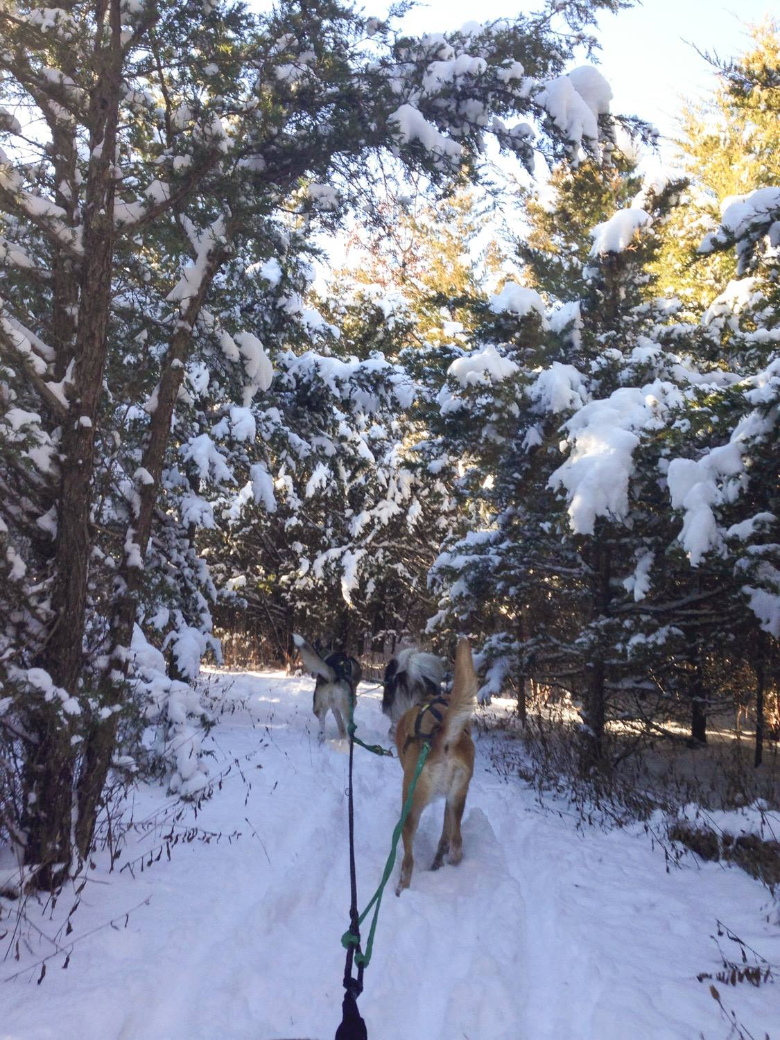 Navigating the winding trails through pines on the Red Trail.