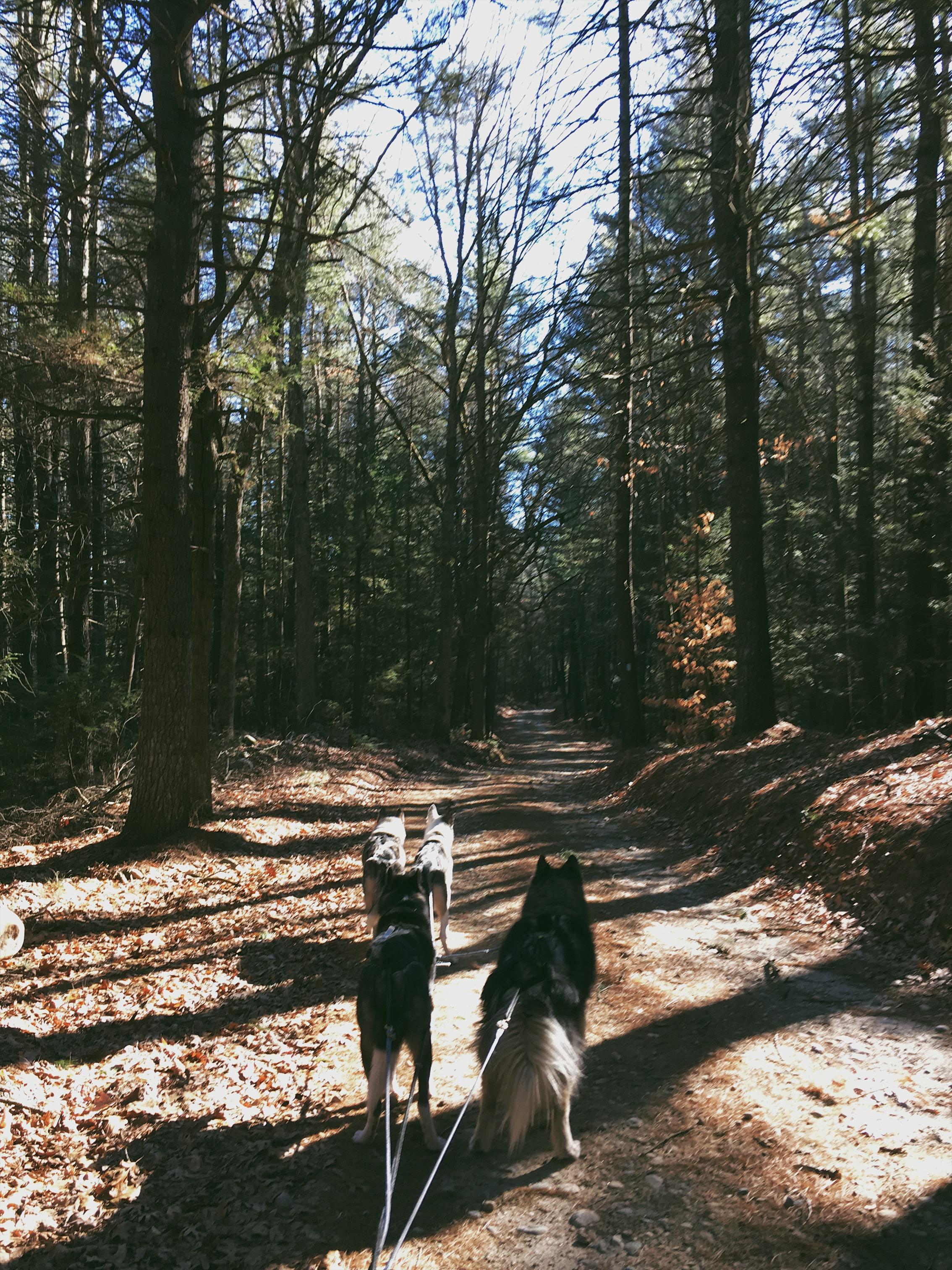 Beautiful, dense pines.