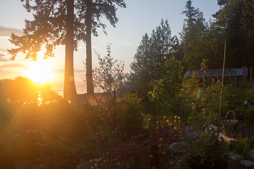 The Rawganique Homestead the warm light of the setting sun.