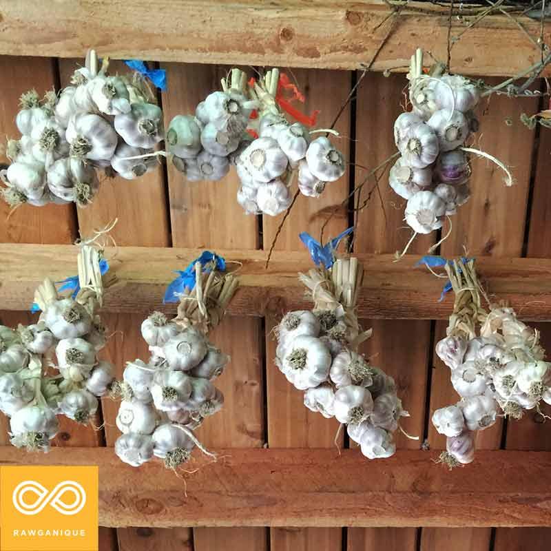 garlic-IMG_5314.jpg