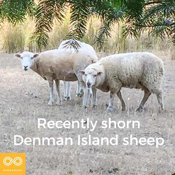 sheep-IMG_8655-Edit.jpg