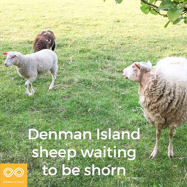 sheep-IMG_3475-Edit.jpg