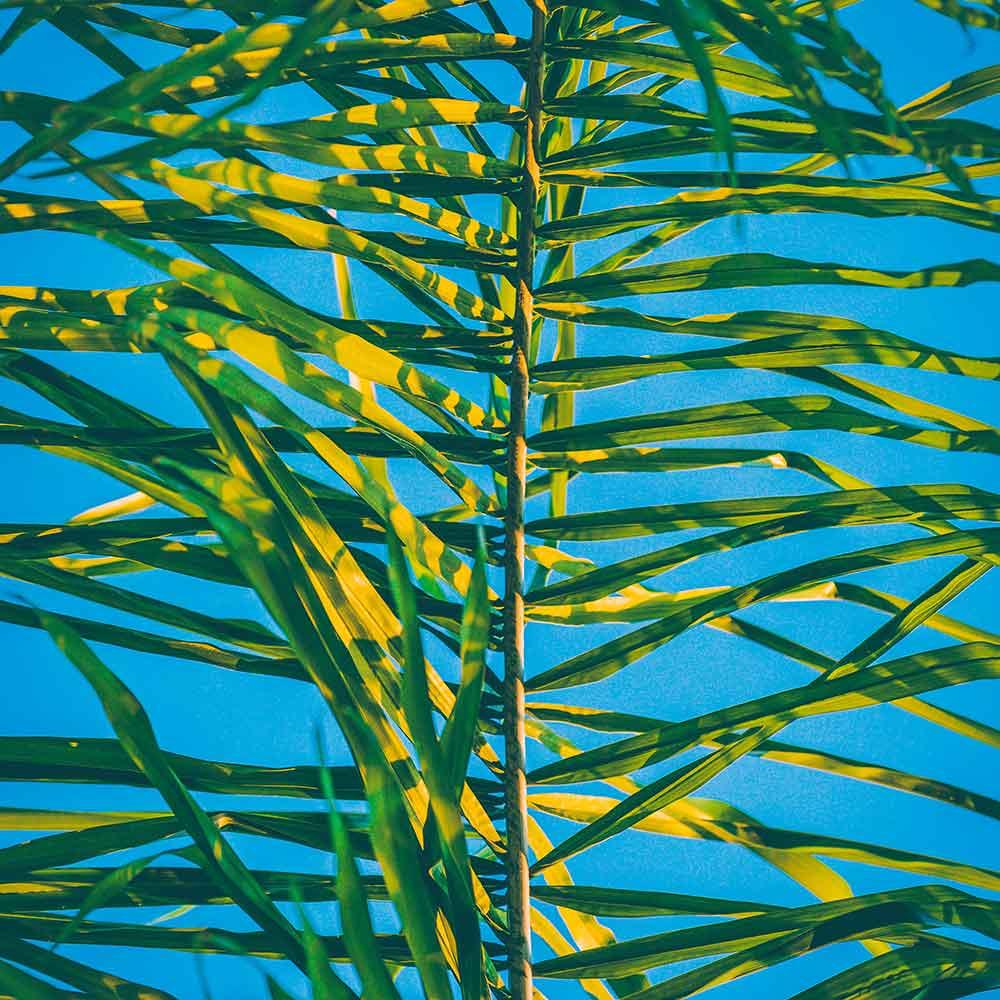 Photo of Bamboo by  Jakob Owens on  Unsplash