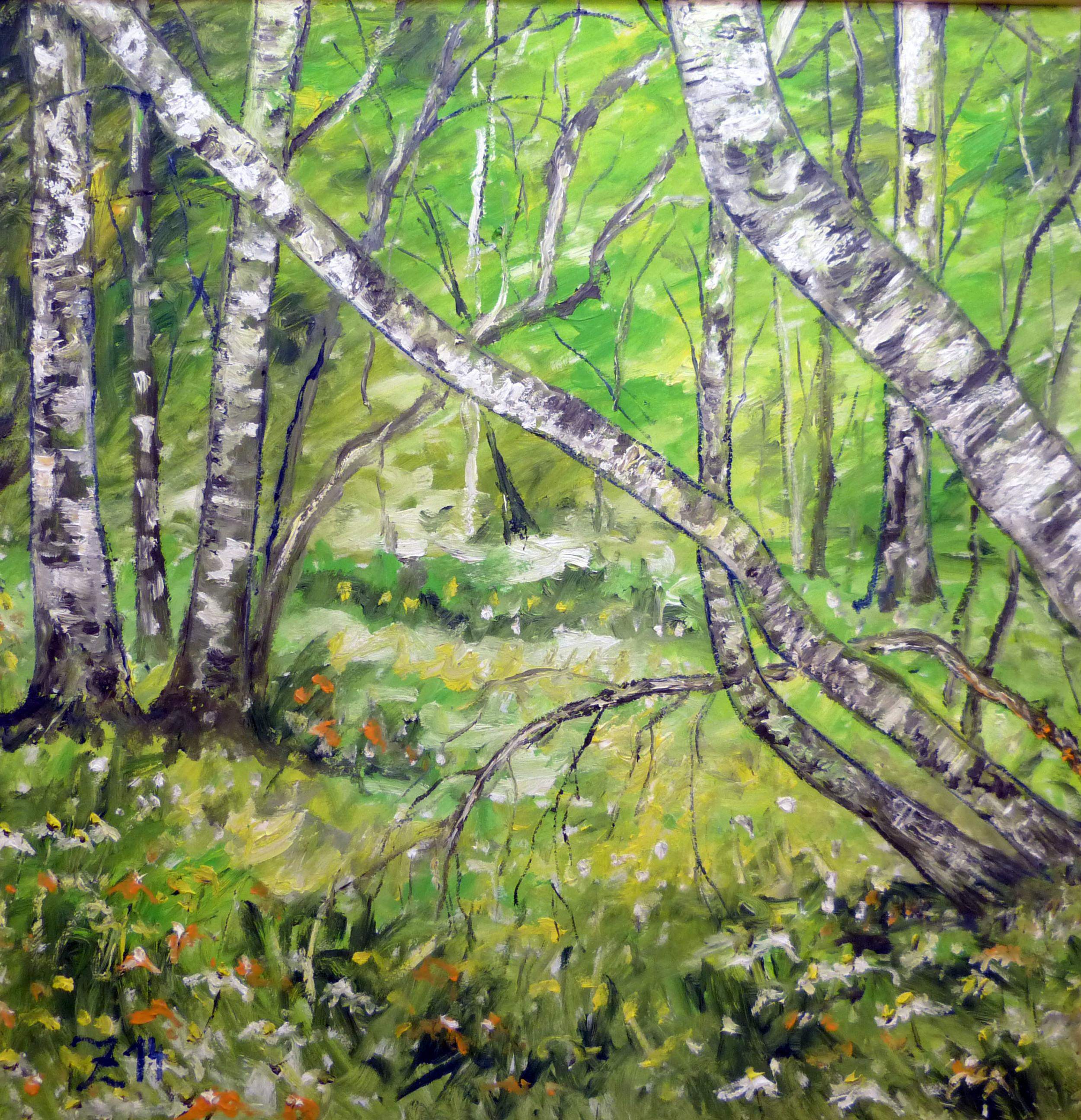70 Birch Trees