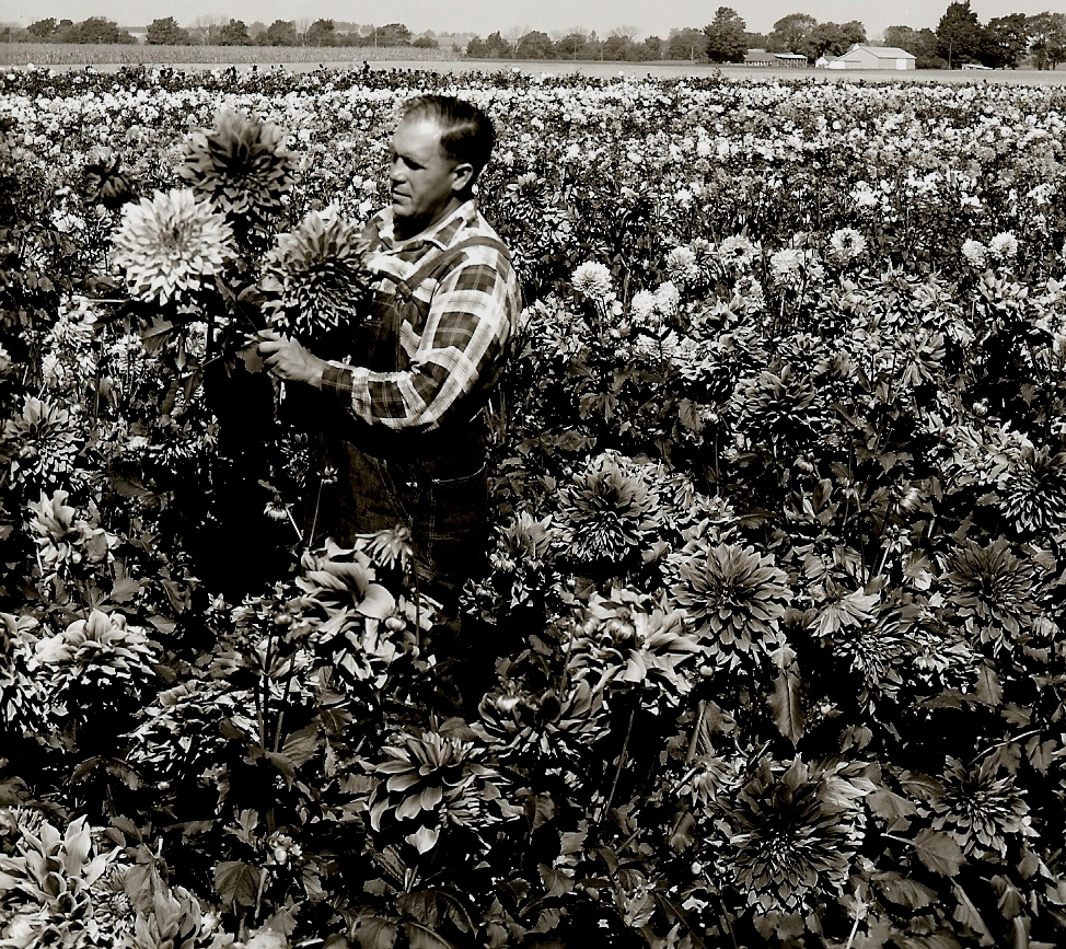 Harvey Koop in his dahlia field