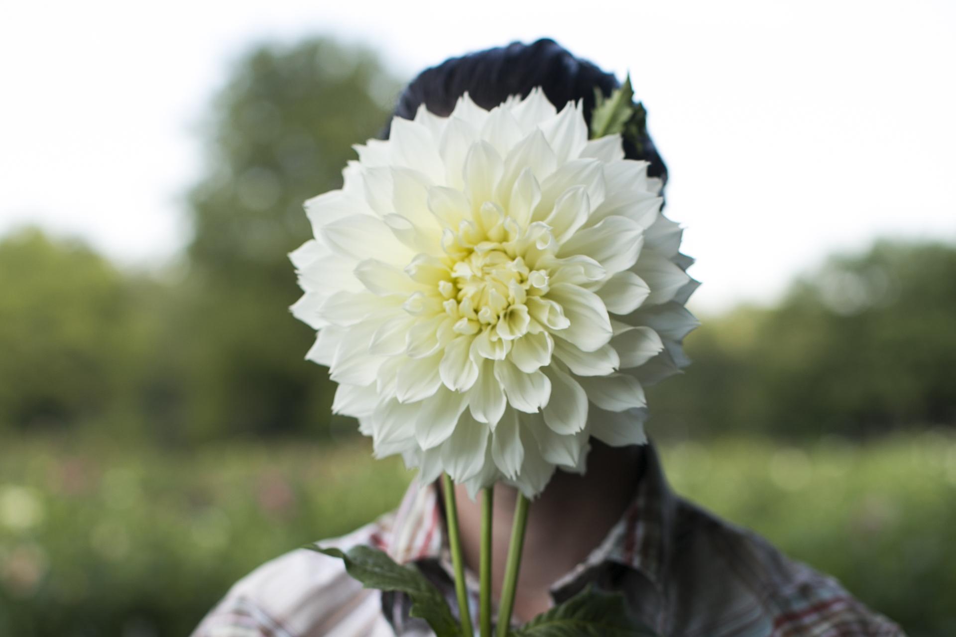 White Toned Dahlias