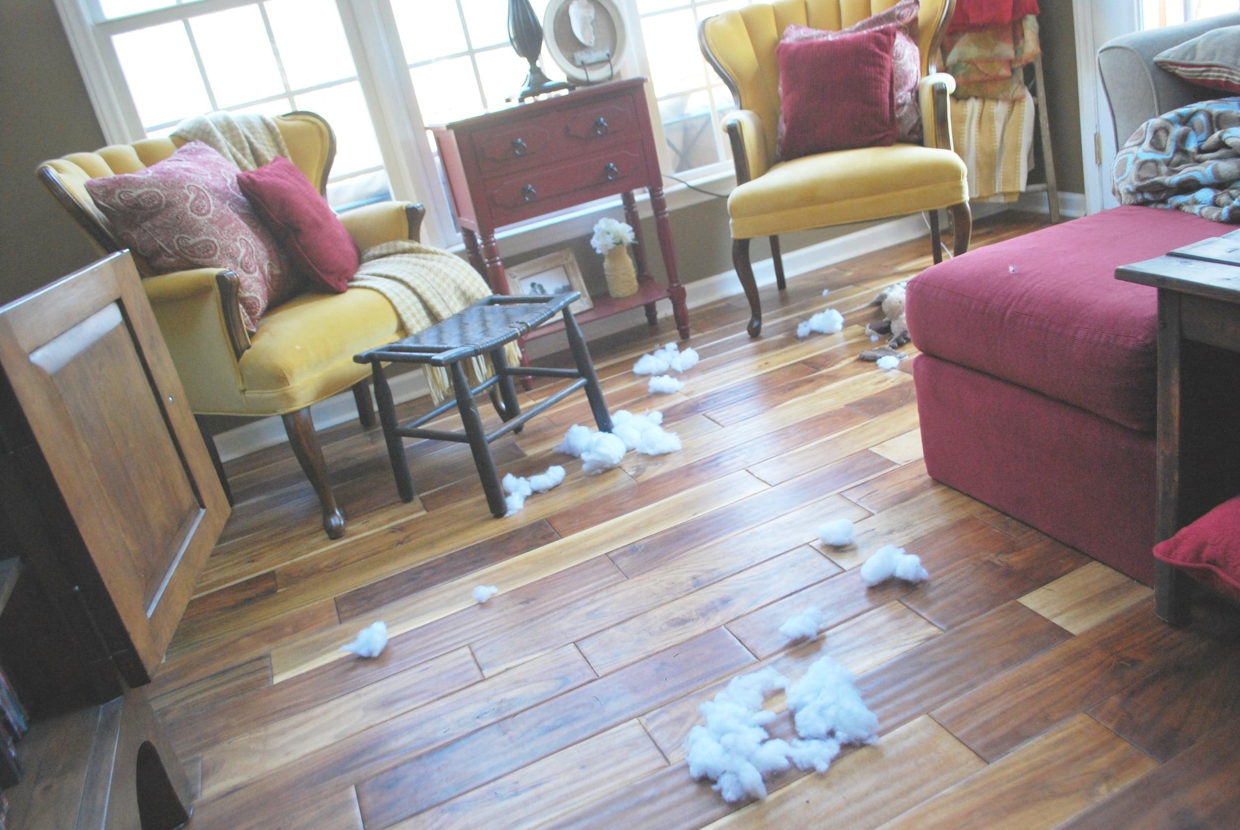 Dog toy stuffing everywhere...