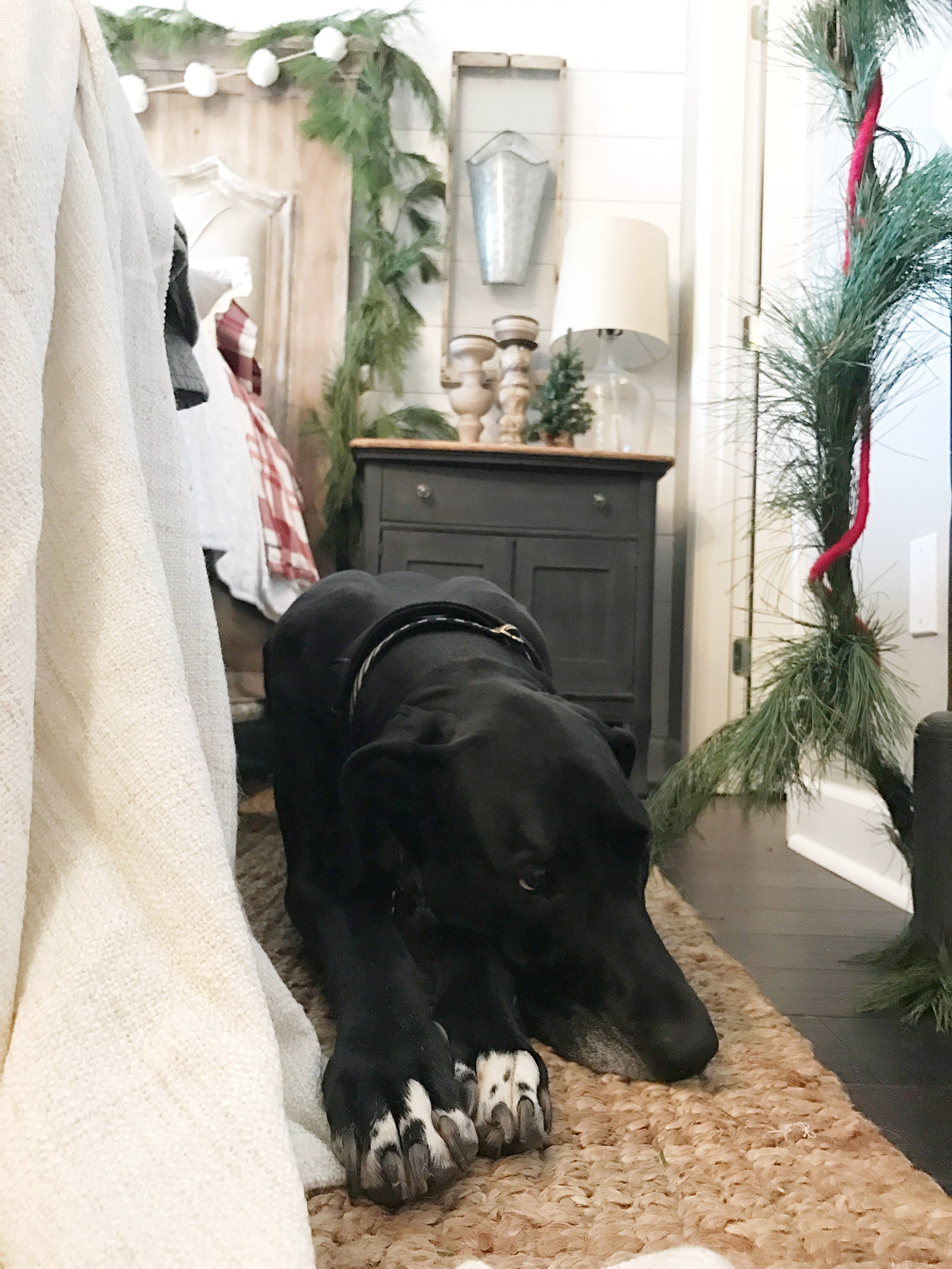 Farmhouse Christmas Bedroom Tour- Bella Kayla Miller's Great Dane Enjoying the Room- Plum Pretty Decor and Design