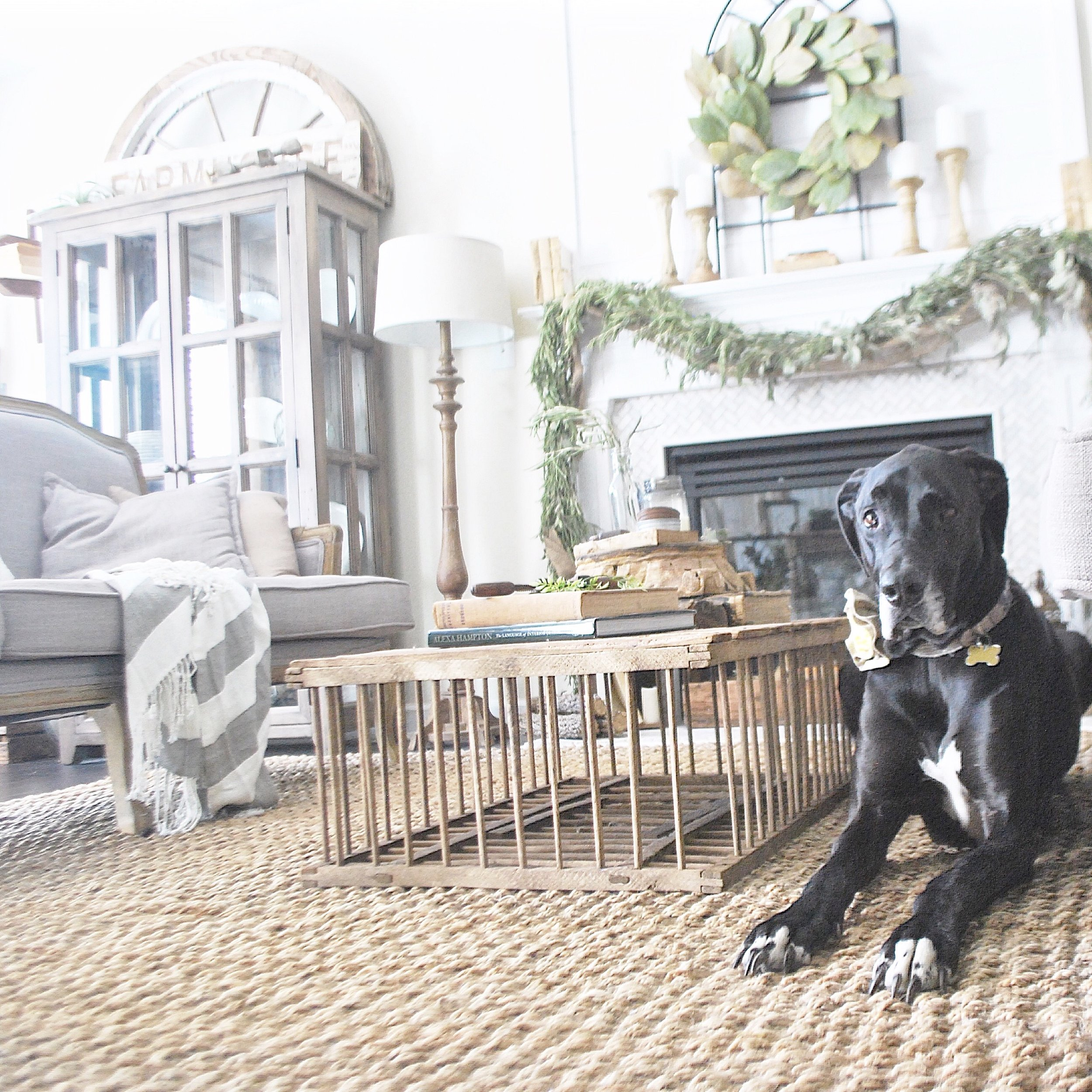 Jute Rug- Dog (Bella) Approved- Farmhouse Style Rug Review