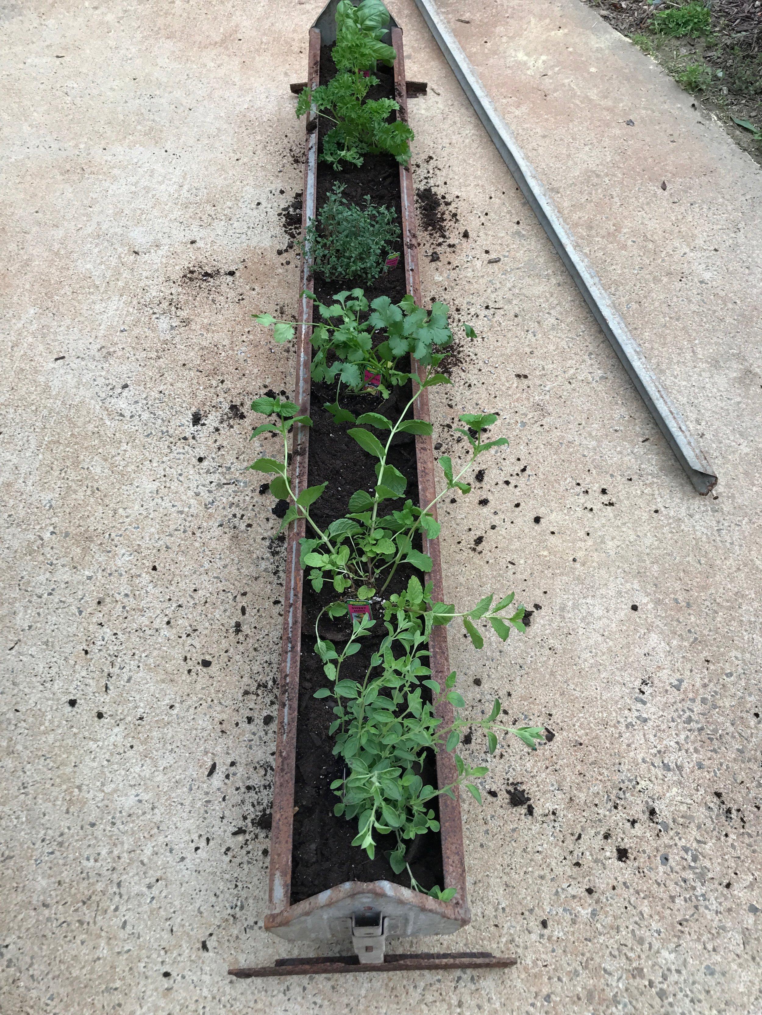DIY Hanging Herb Garden- Planting the Herbs