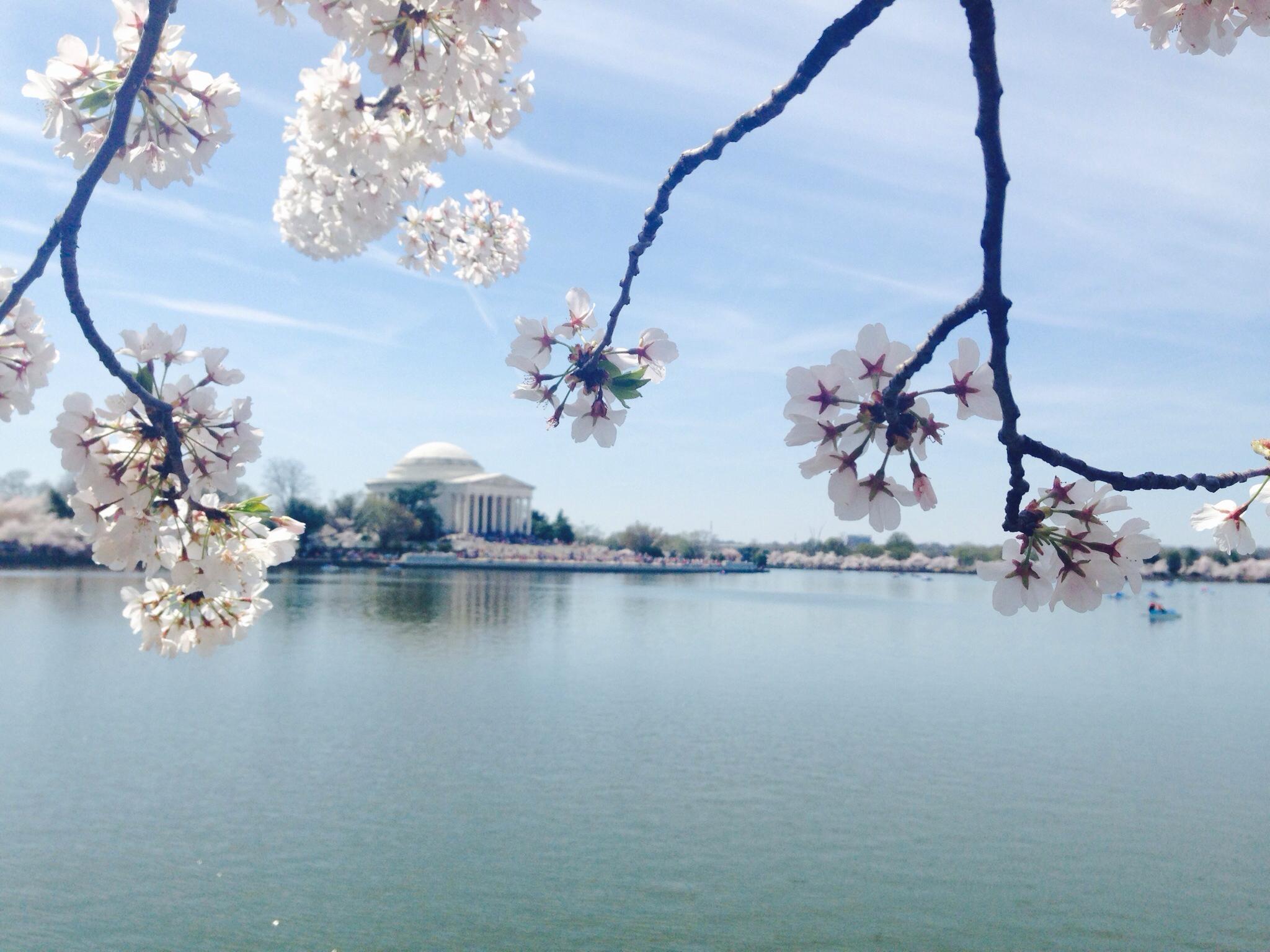Cherry Blossom Princess Program