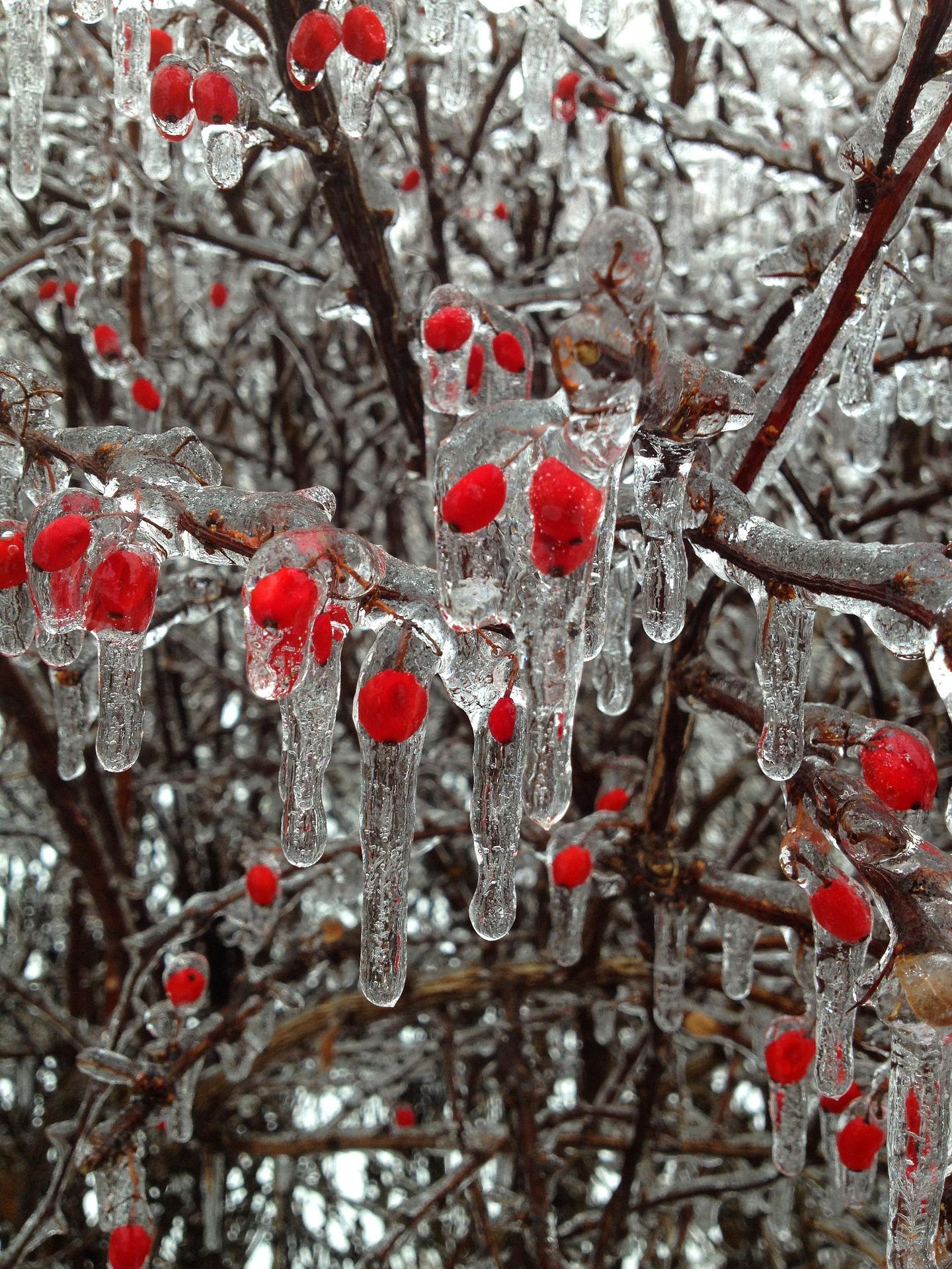 berries-302341_1920.jpg