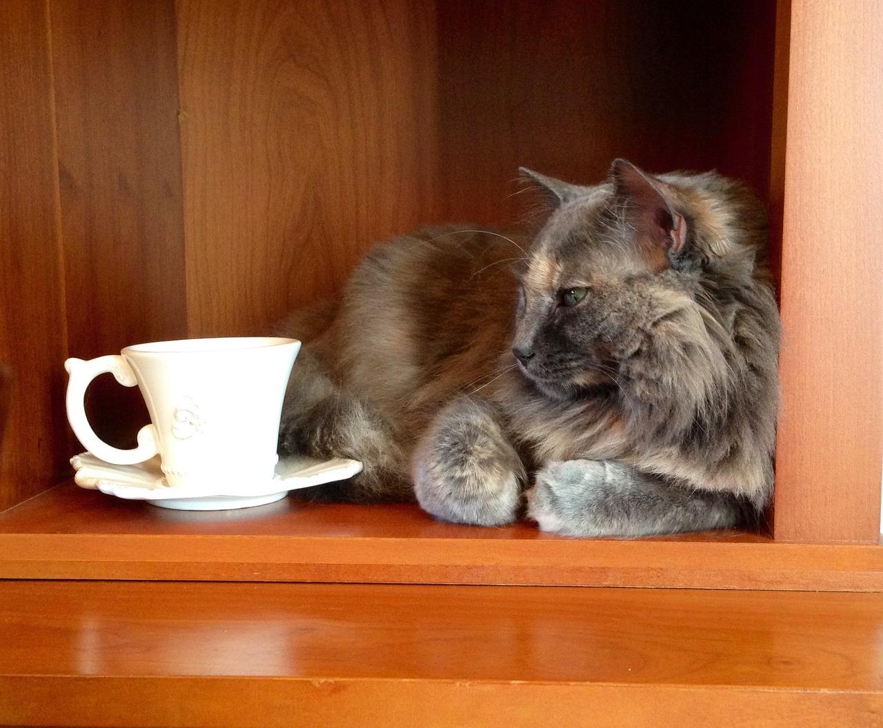 cat-1159390_1280.jpg