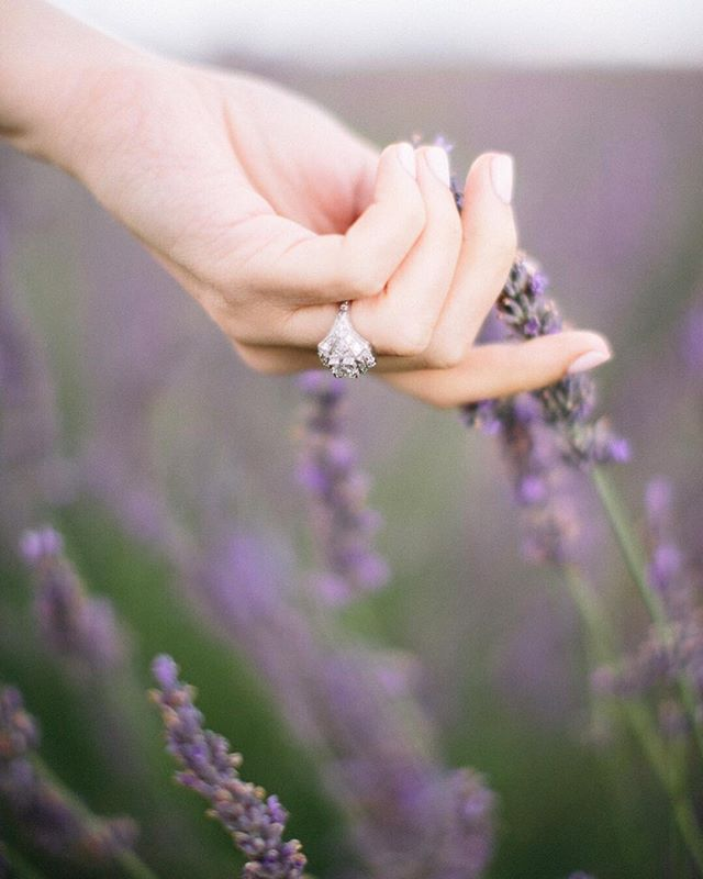 ~ ������� ~ Can you smell the perfume of lavender and feel the cracks of lavender drying under your fingers? ⠀ ~ ⠀ Photography : @sayaphotography for @studiohlala | Wedding Planner : @wepinprovence @wepevents ⠀  #travel #passionpassport #traveler #travelblog #travelblogger #landscape #traveladdict #landscapelover #landscape_lovers #naturephoto #natureshooters #lifestyle #naturediversity #thecreatives #dametraveler #lavender #lavenderfields #destinationwedding #weddingphotographer #destinationweddingphotographer #lifestylephotographer #naturallightphotographer #luxuryweddingphotographer #lookslikefilm #fineartweddingphotographer #fineartweddingphotography #provencefineartweddingphotographer #weddingphotographerprovence #engagementring