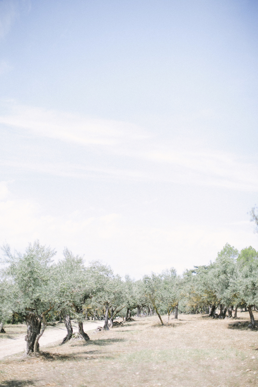 saya-photography-wedding-photographer-provence-chateau-de-robernier-oliver-tree-.jpg