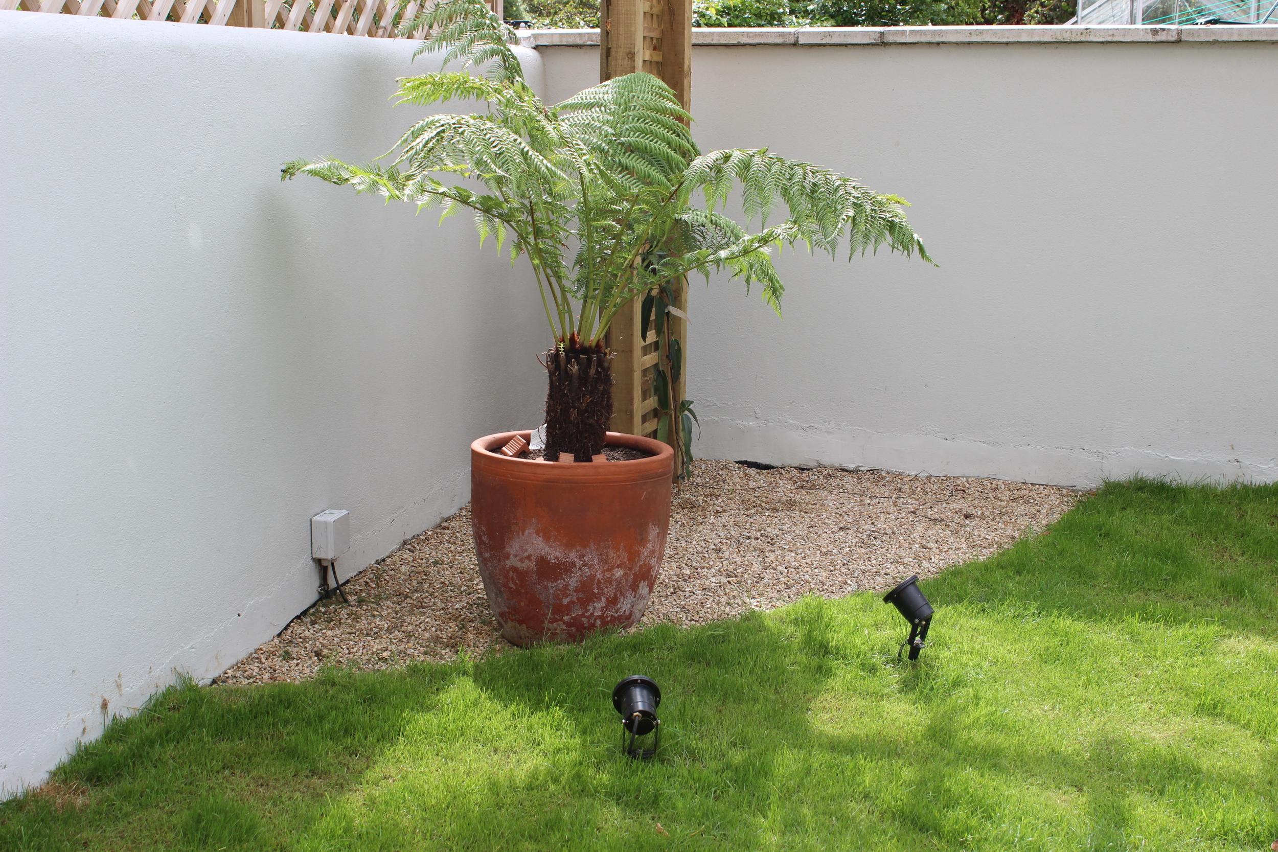 Planted fern