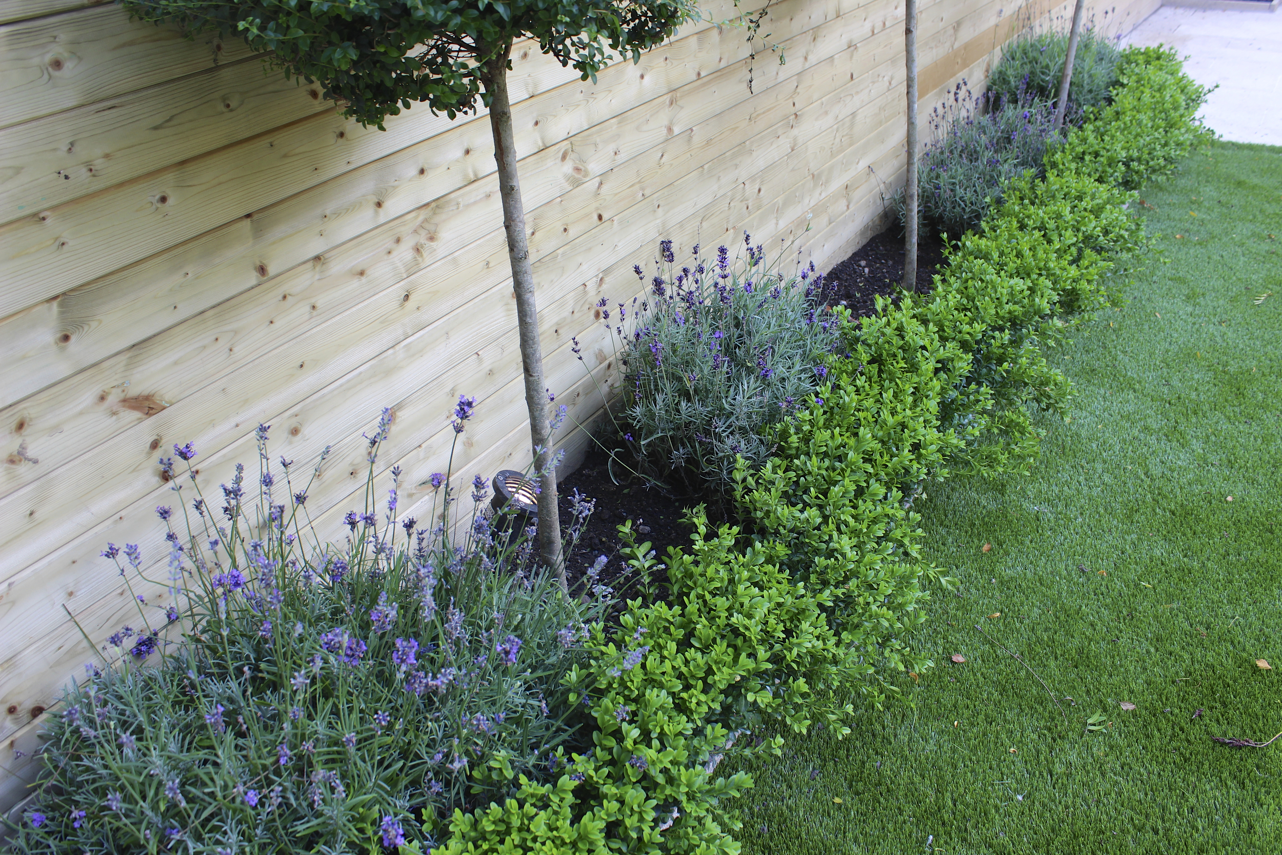 Buxus and Lavender