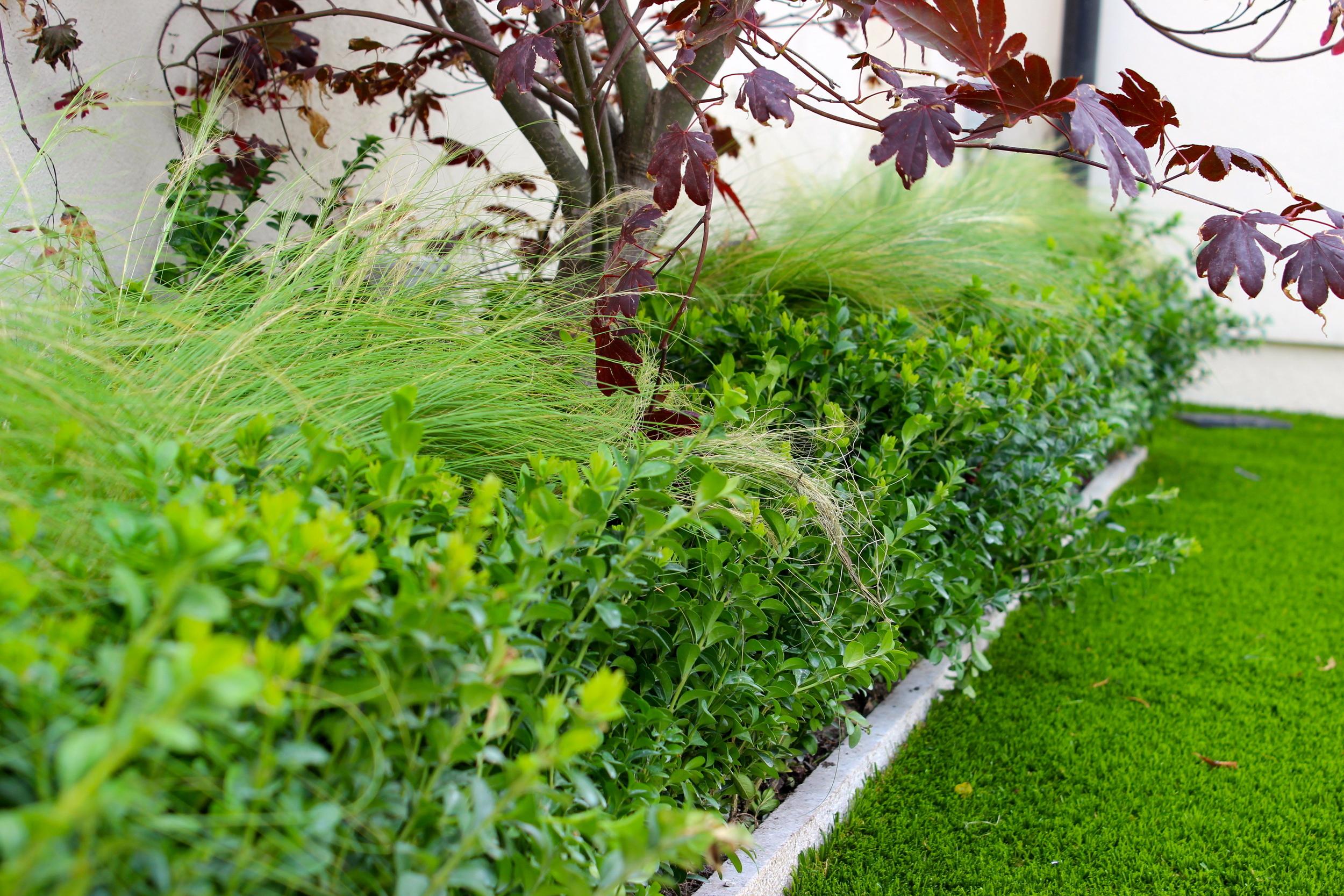 Tree and turf