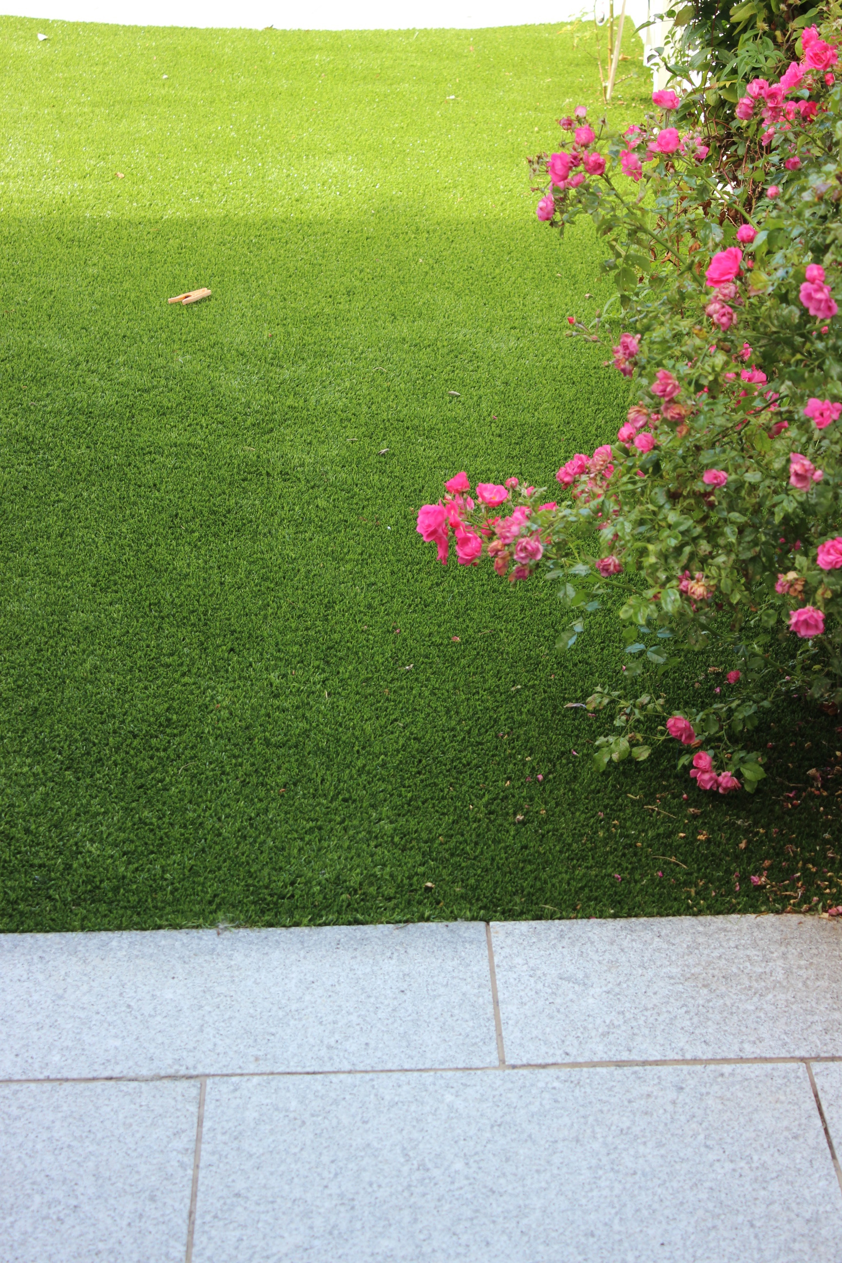 rose and synthetic grass