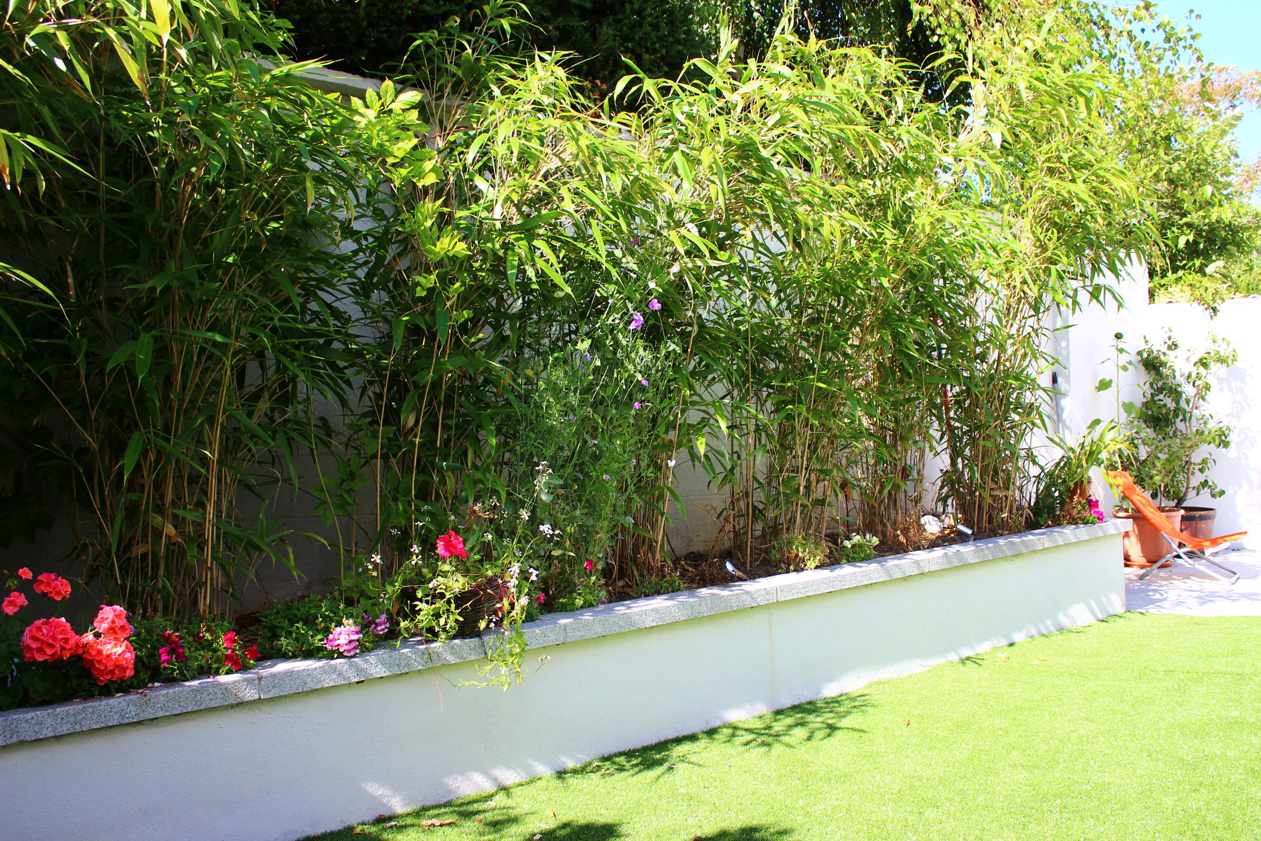 bamboo and grass