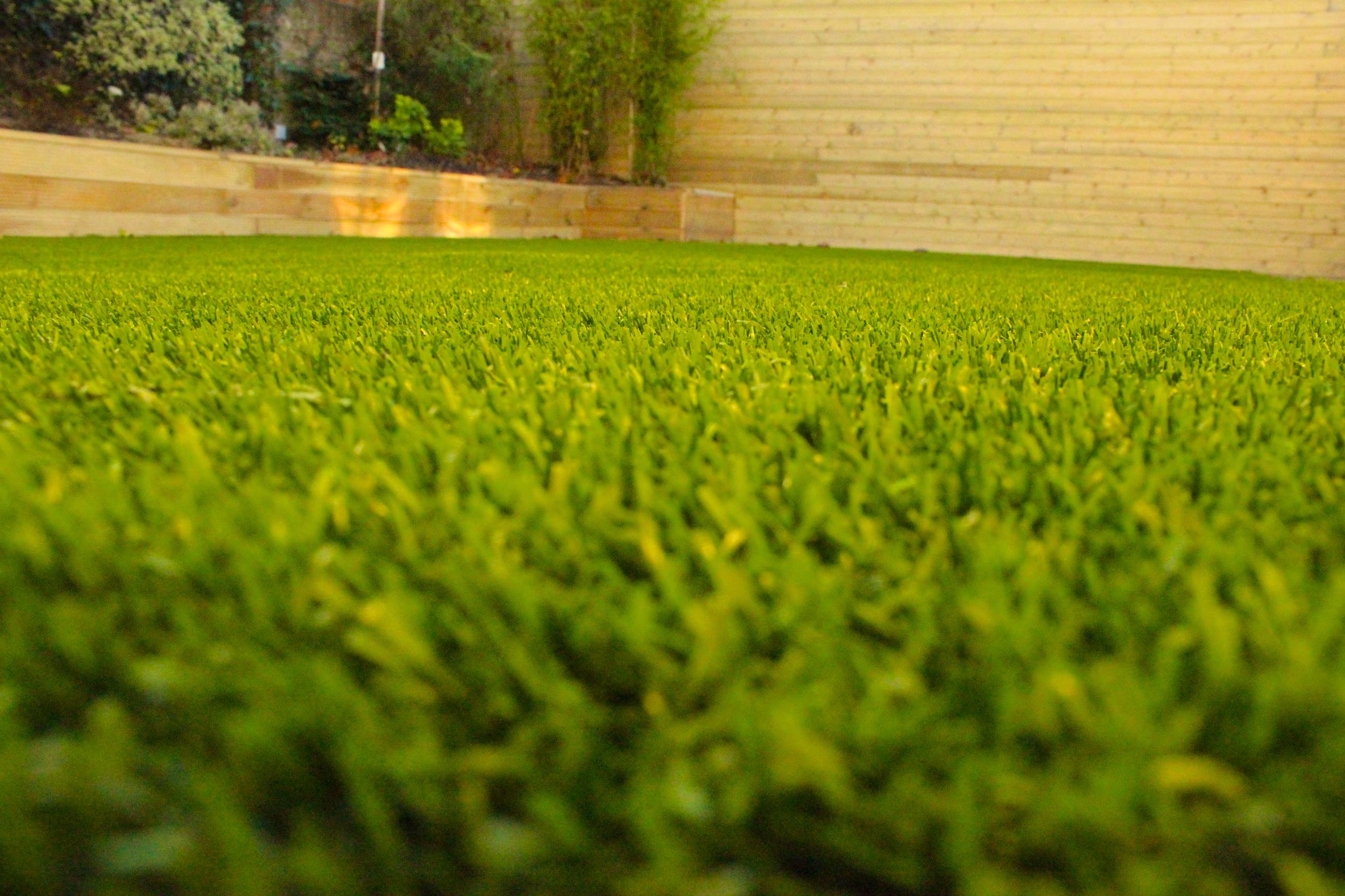 nice lawn.jpg