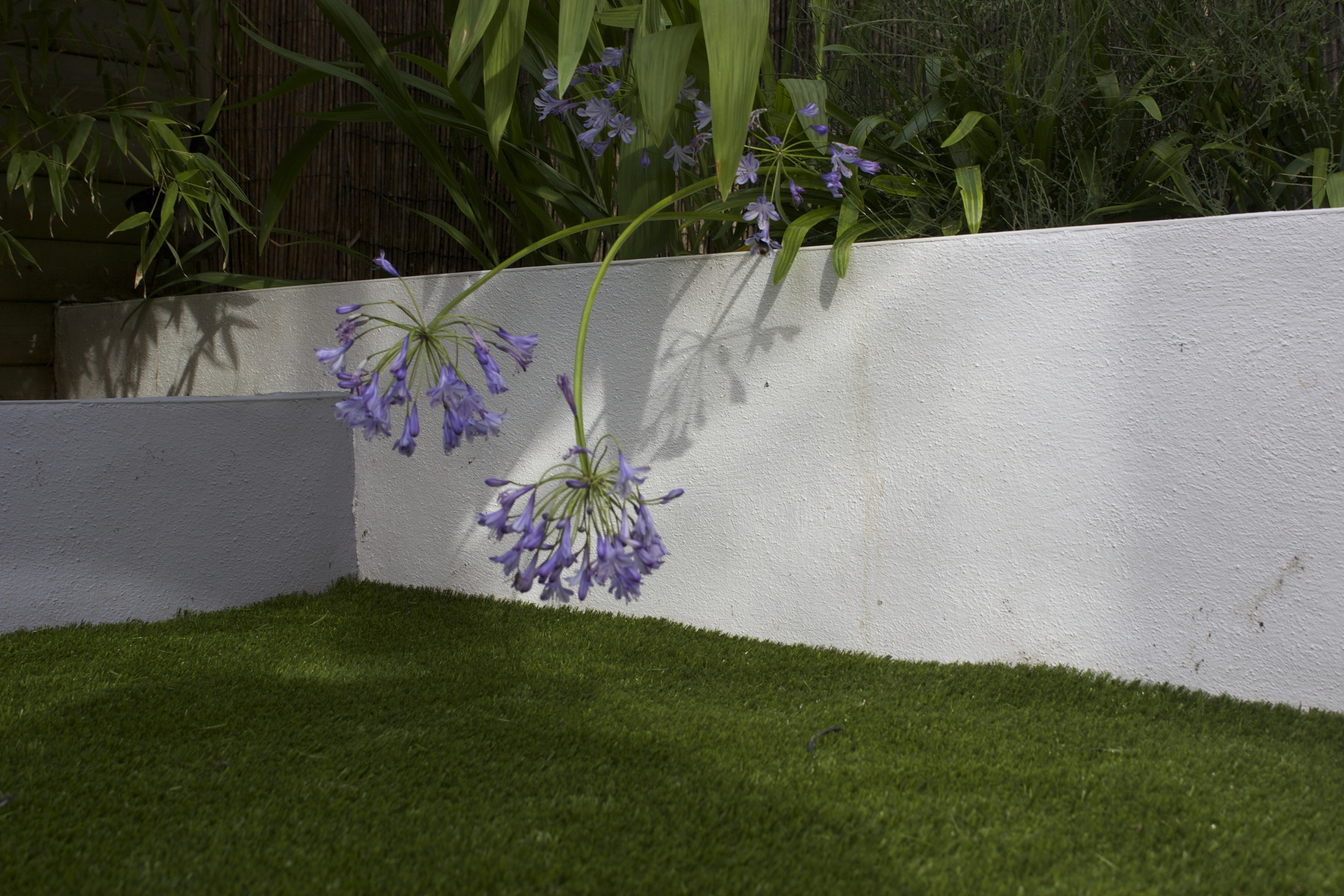 flowers and artificial Lawn