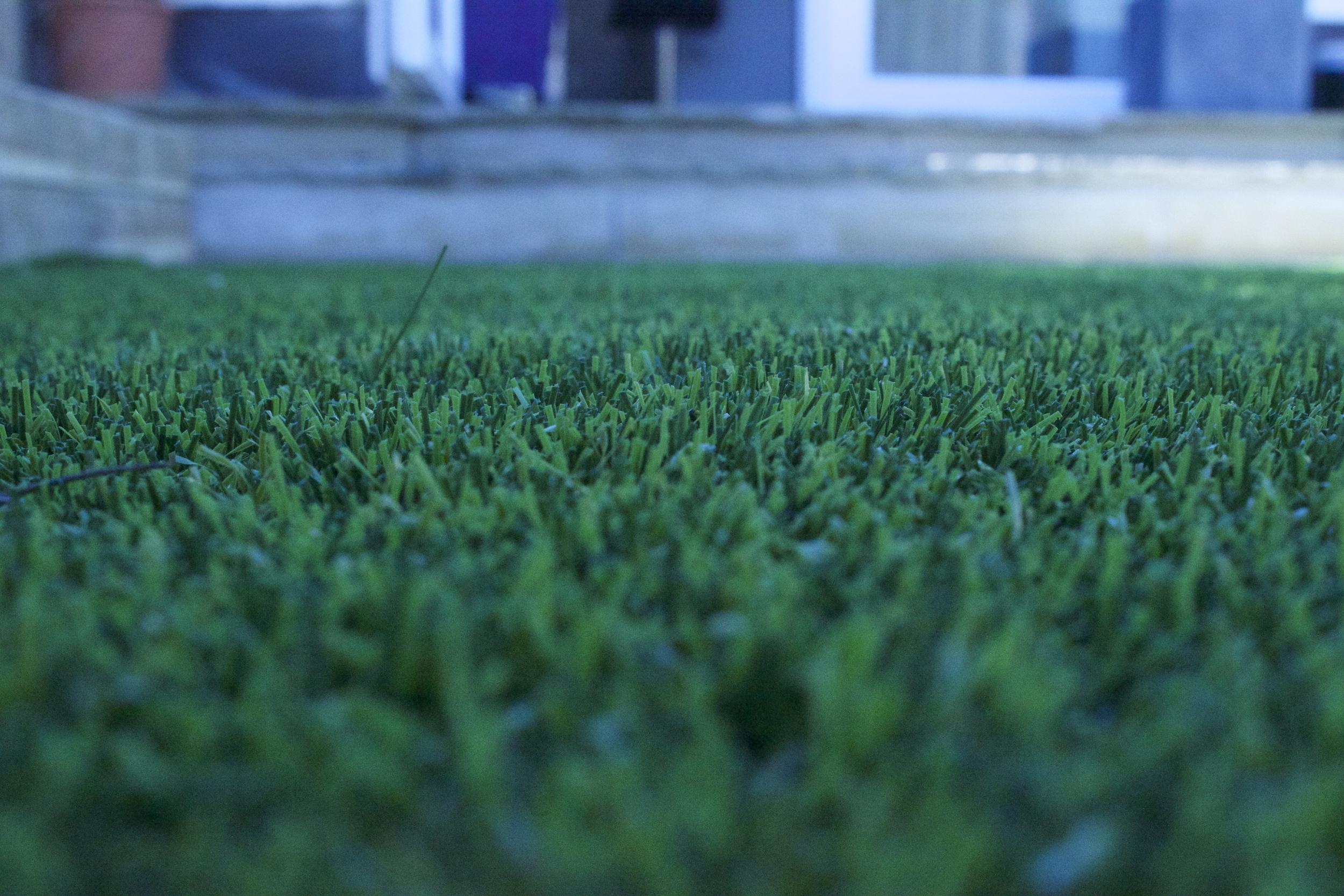 Evergreen Grass