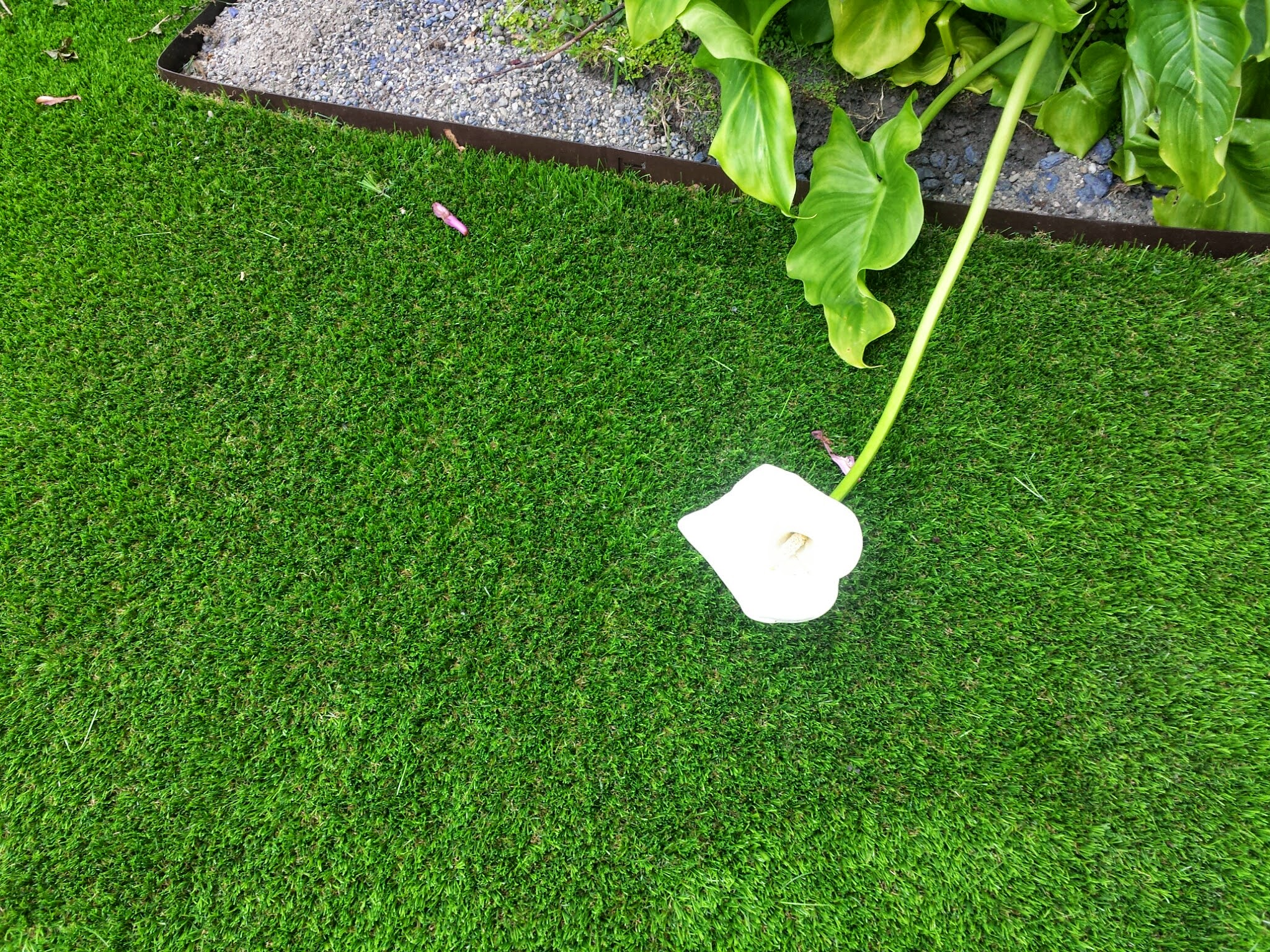 artificial grass on front lawn