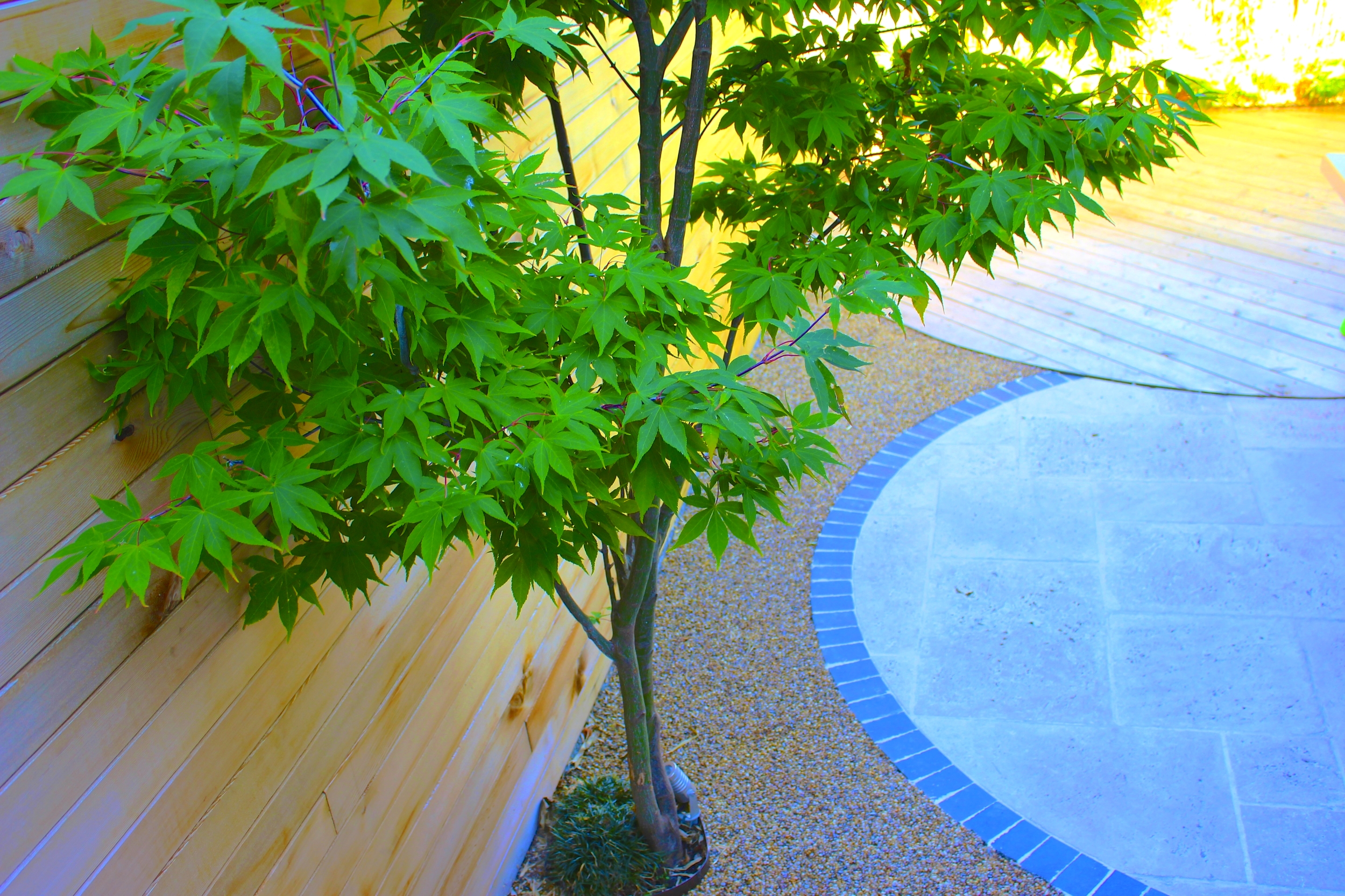 Tree with Resin bond and paving