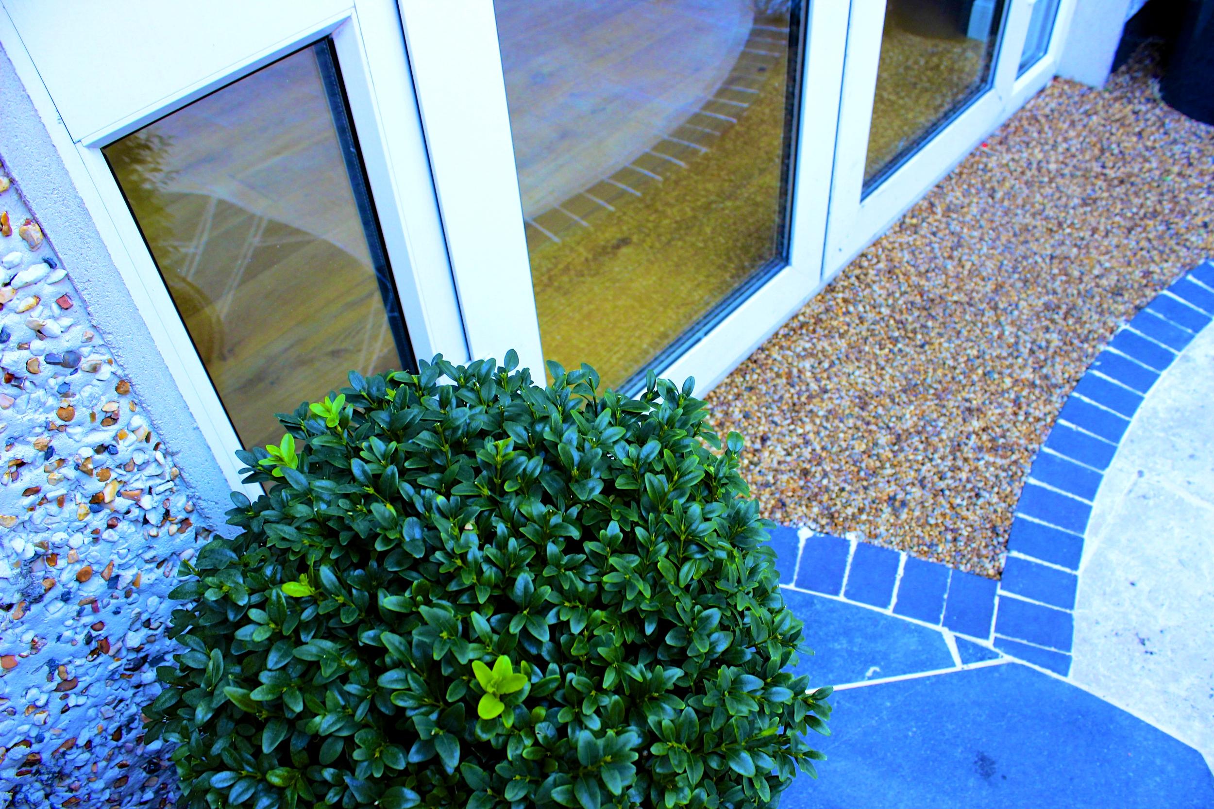 buxus sphere at doorstep