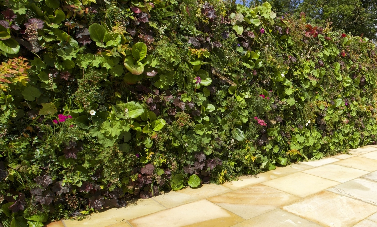 Living Wall installation