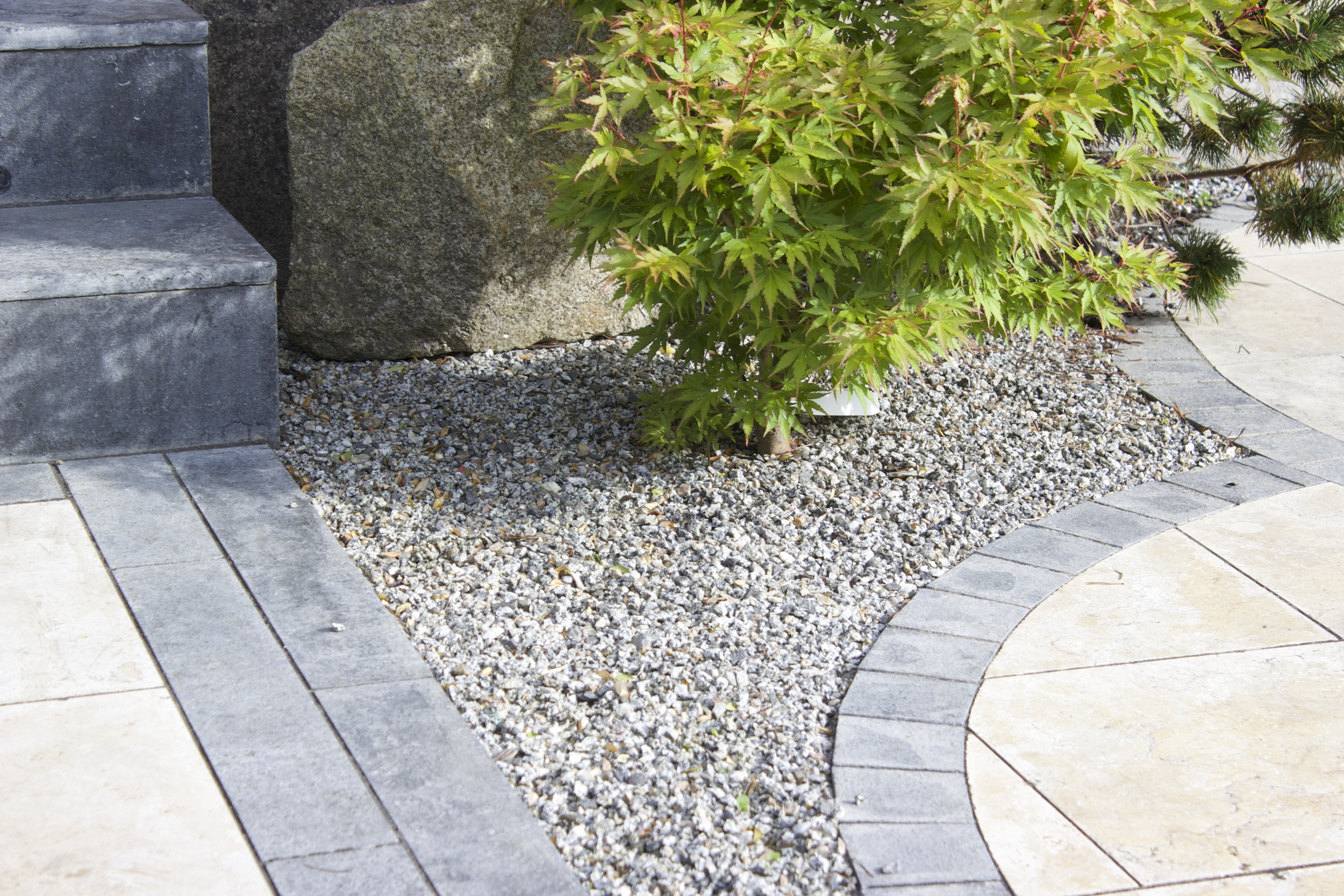 Maple and Paving
