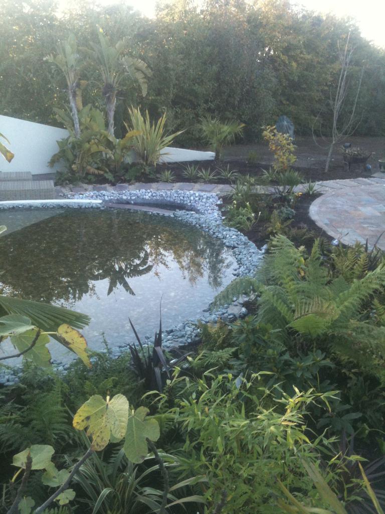Rainforest Garden