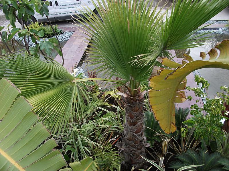 rainforest planting