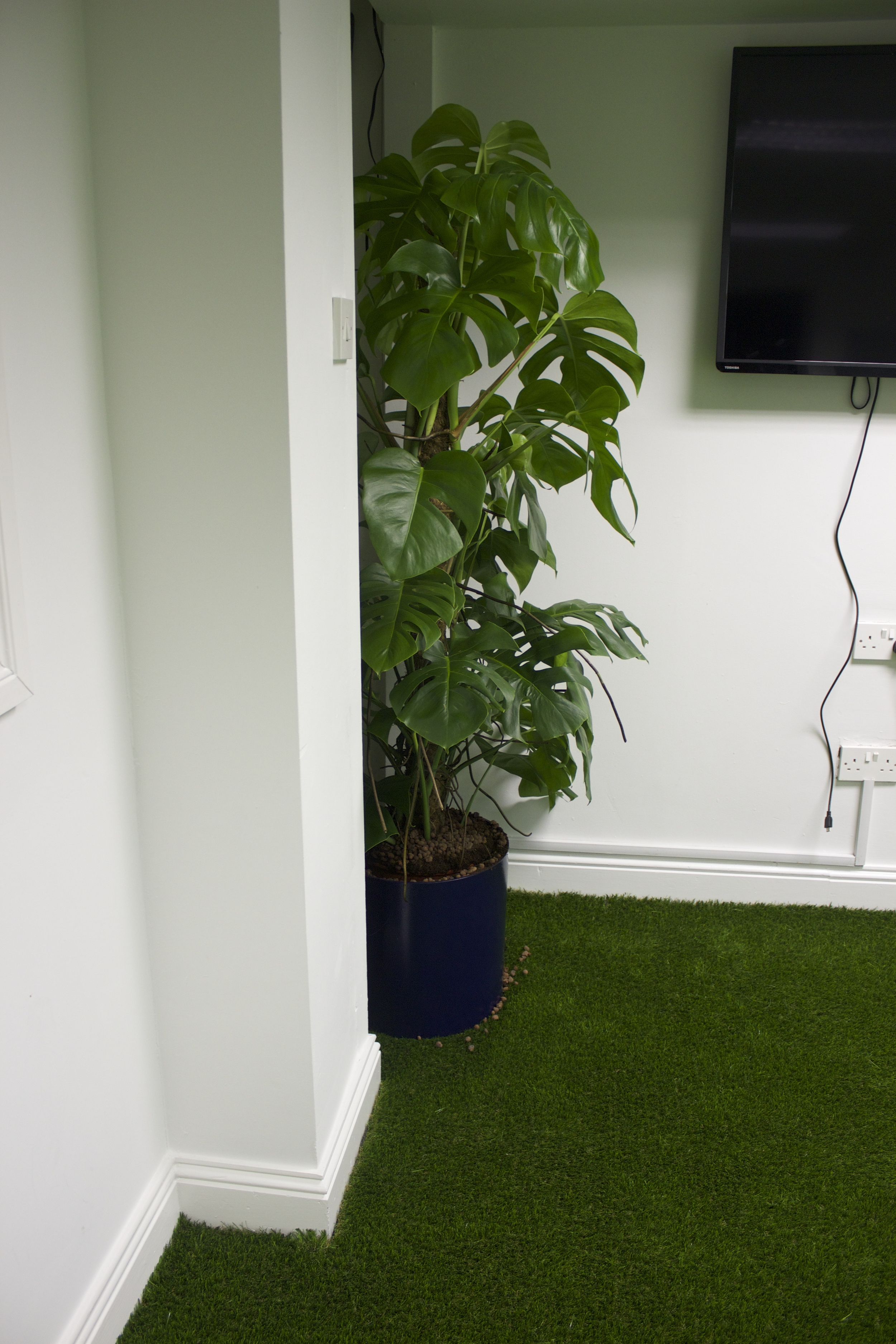 plant and grass