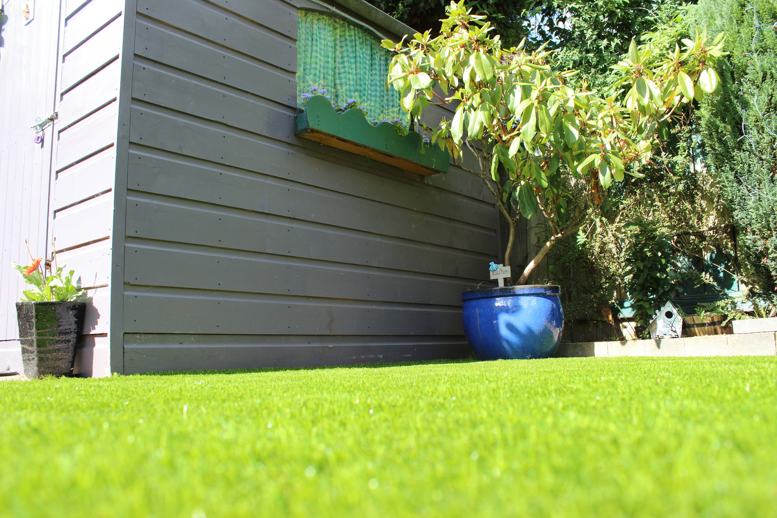 shed and grass
